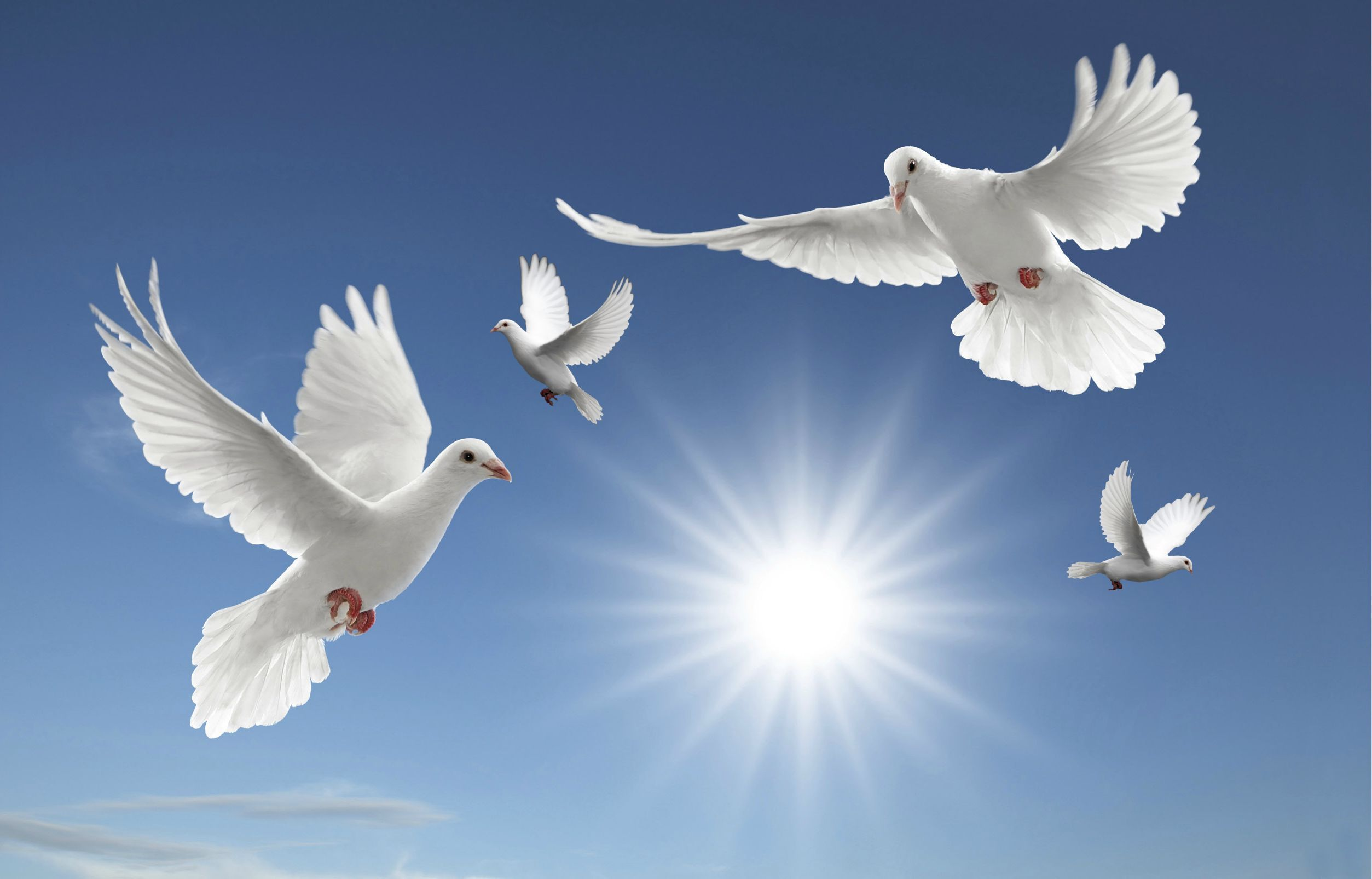 Dove Wallpapers: Find best latest Dove Wallpapers in HD for your PC