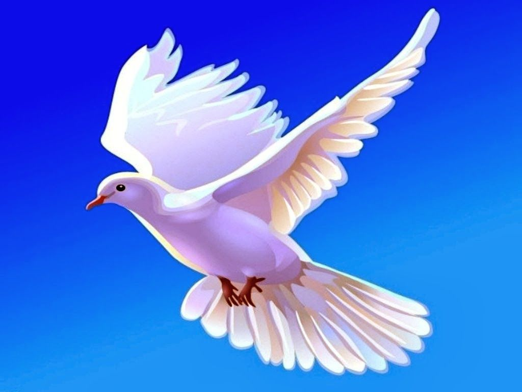 Dove wallpapers HD