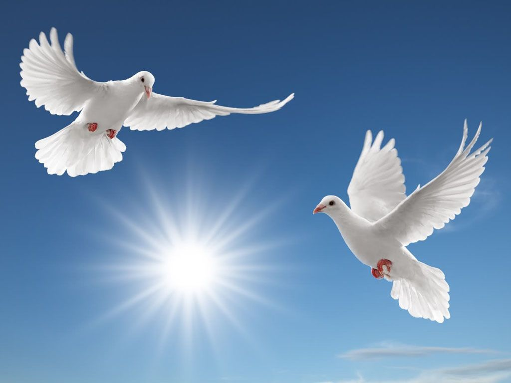 Peace Dove Wallpapers 14