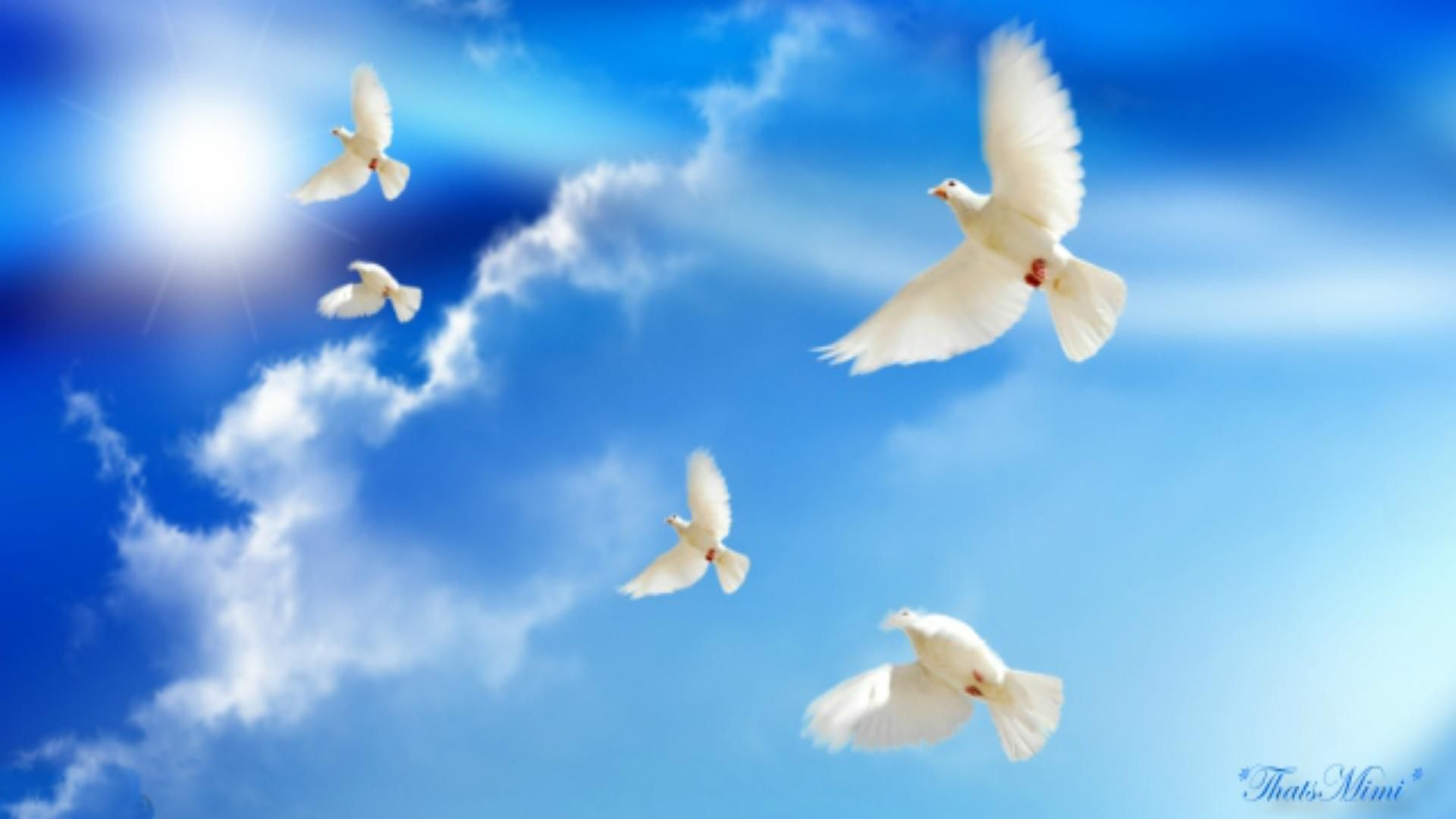 Peace Dove Wallpapers 15