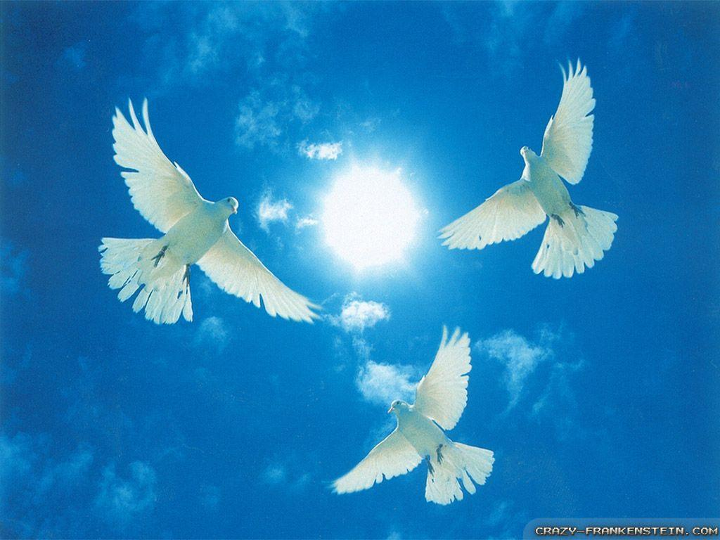 Love Doves wallpapers
