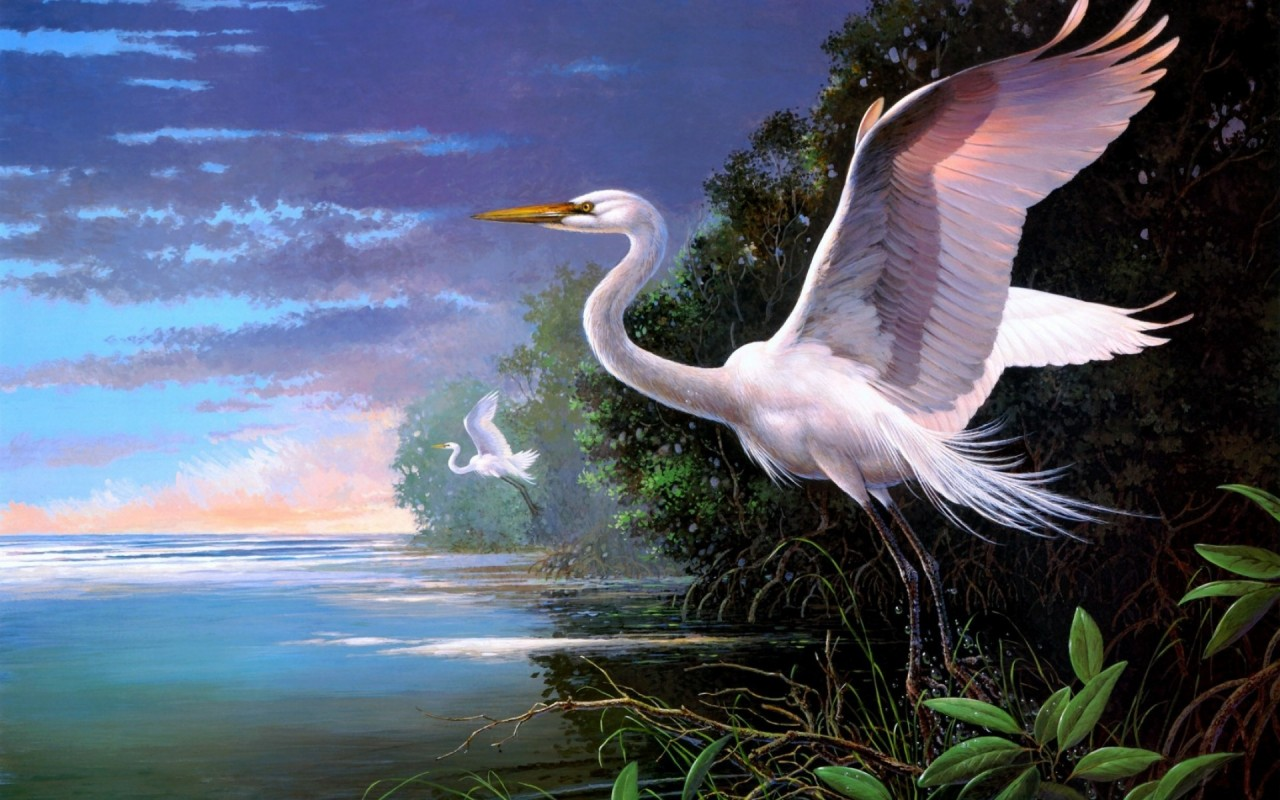 Herons Ready For Take Off wallpapers