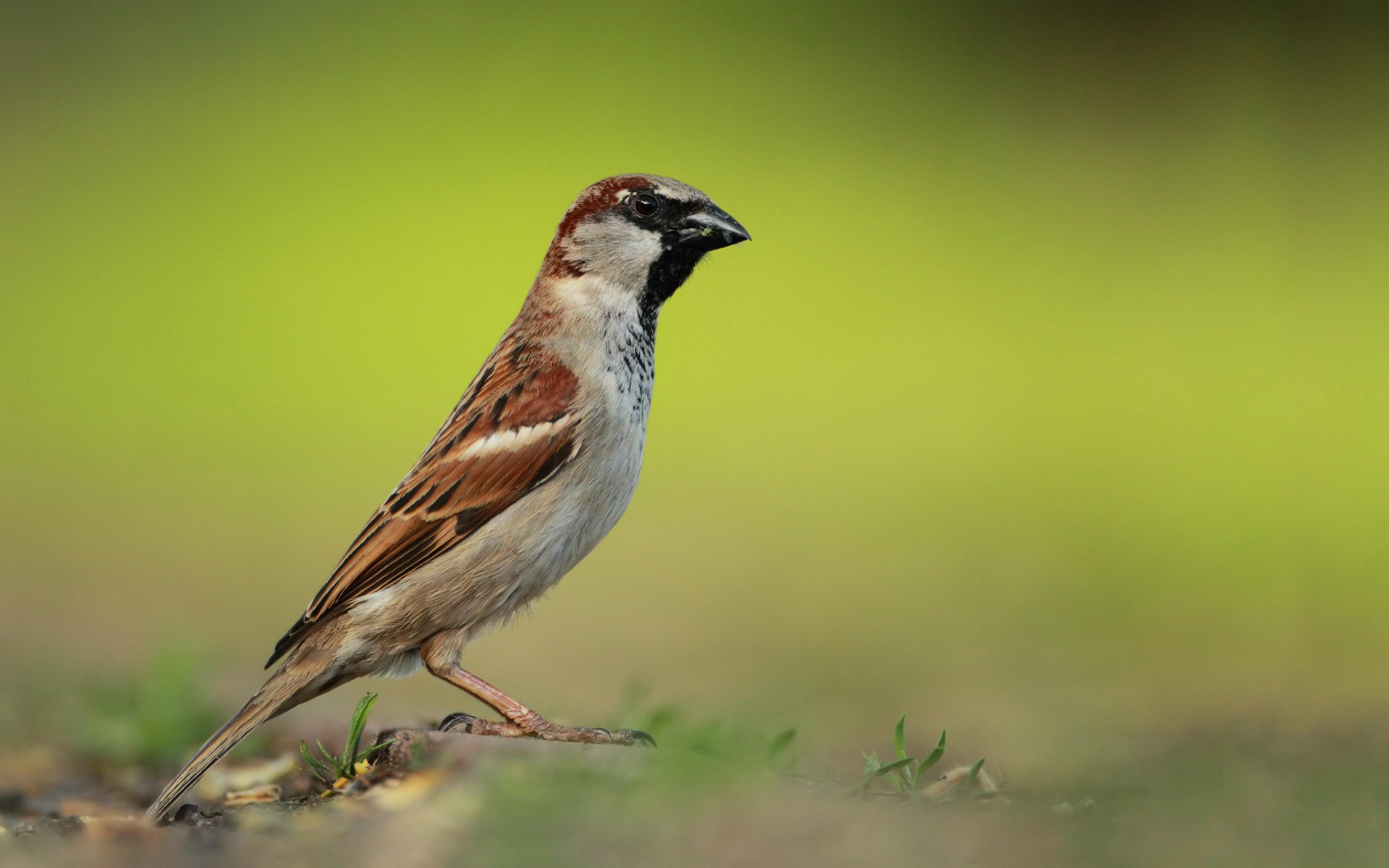 Sparrow Wallpapers Hd on WallpaperGet