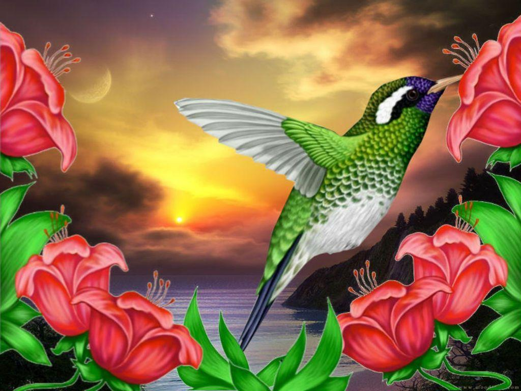 Wallpapers For > Hummingbird Wallpapers Pattern