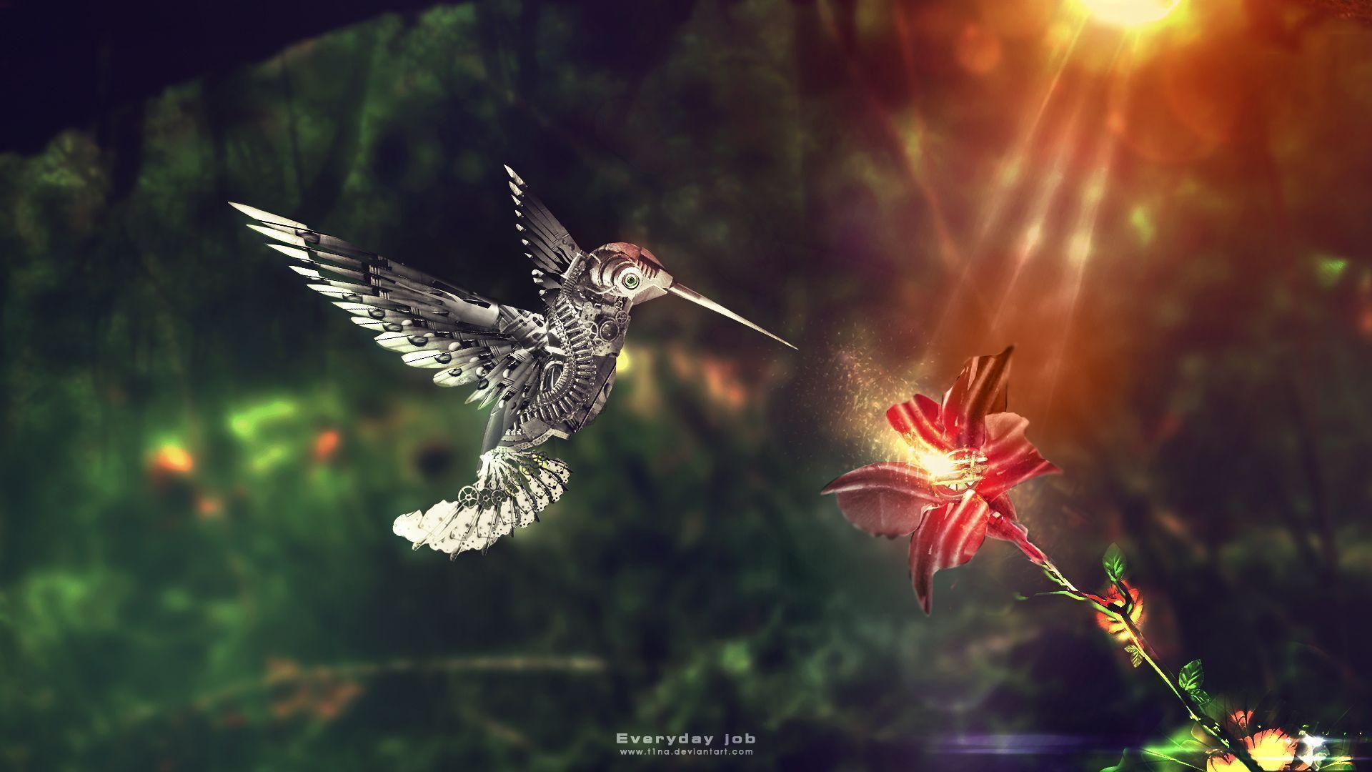 Wallpapers For > Moving Hummingbird Wallpapers