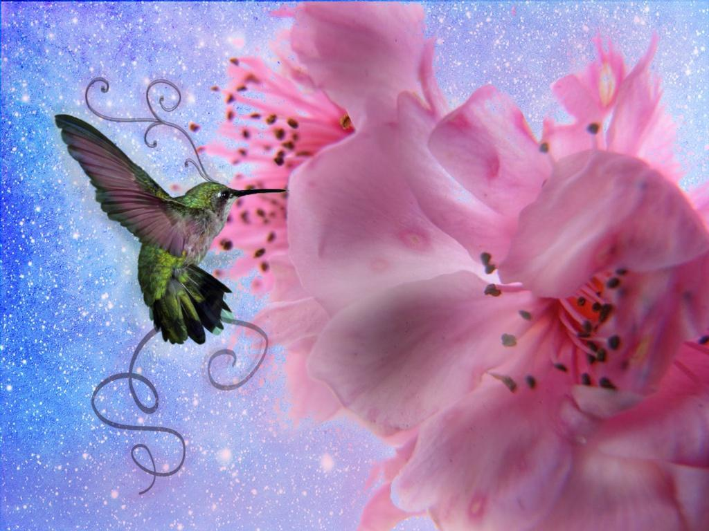 Animals For > Pretty Hummingbirds Wallpapers