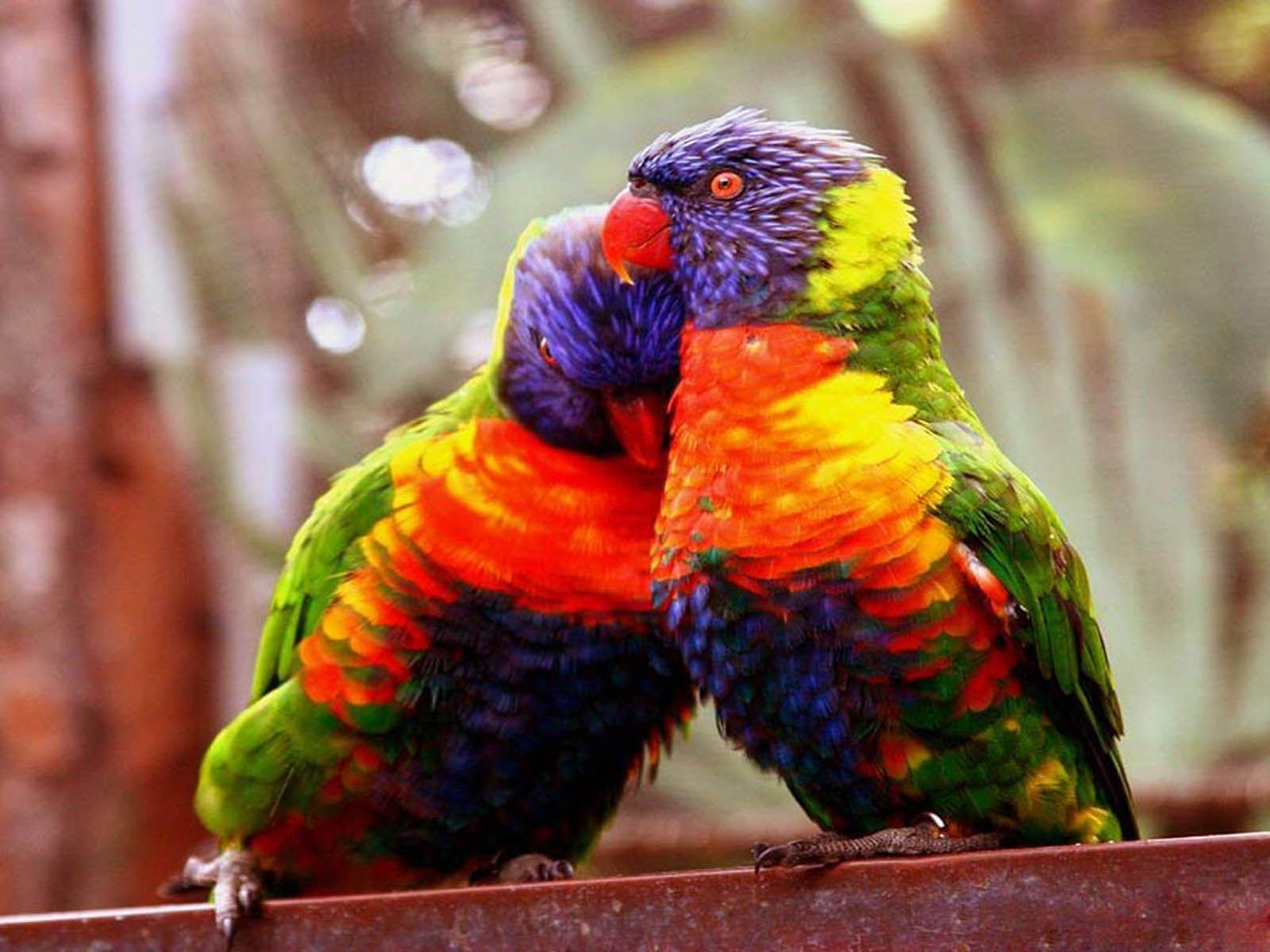 Wallpapers For > Sweet Love Birds Wallpapers