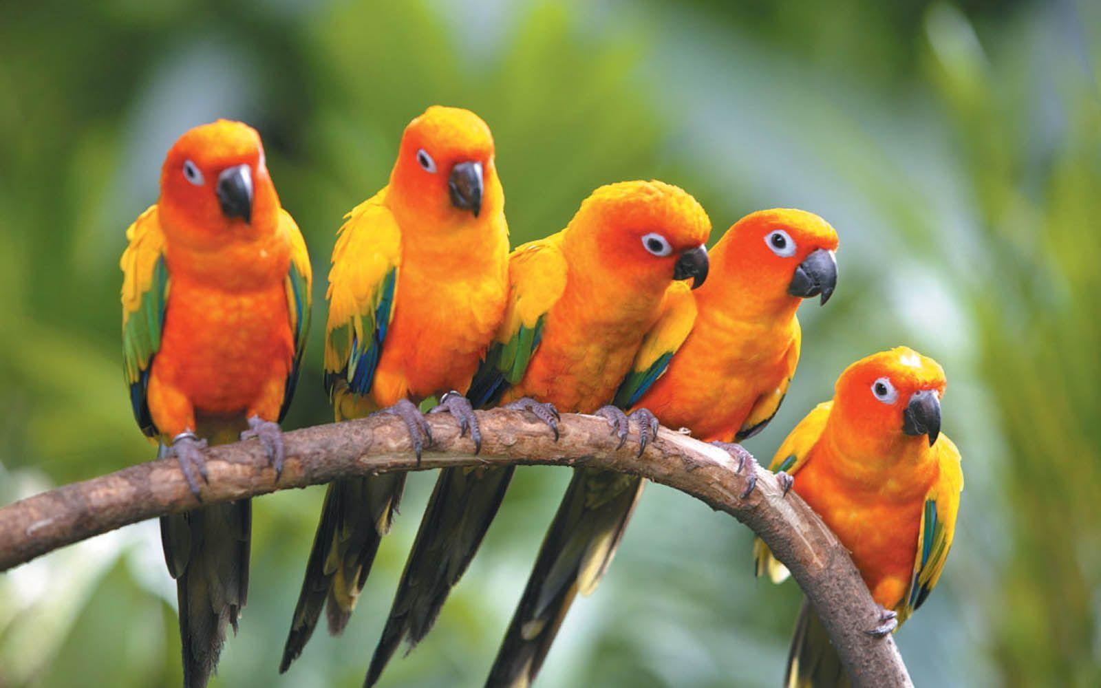Love Birds Image & Pictures