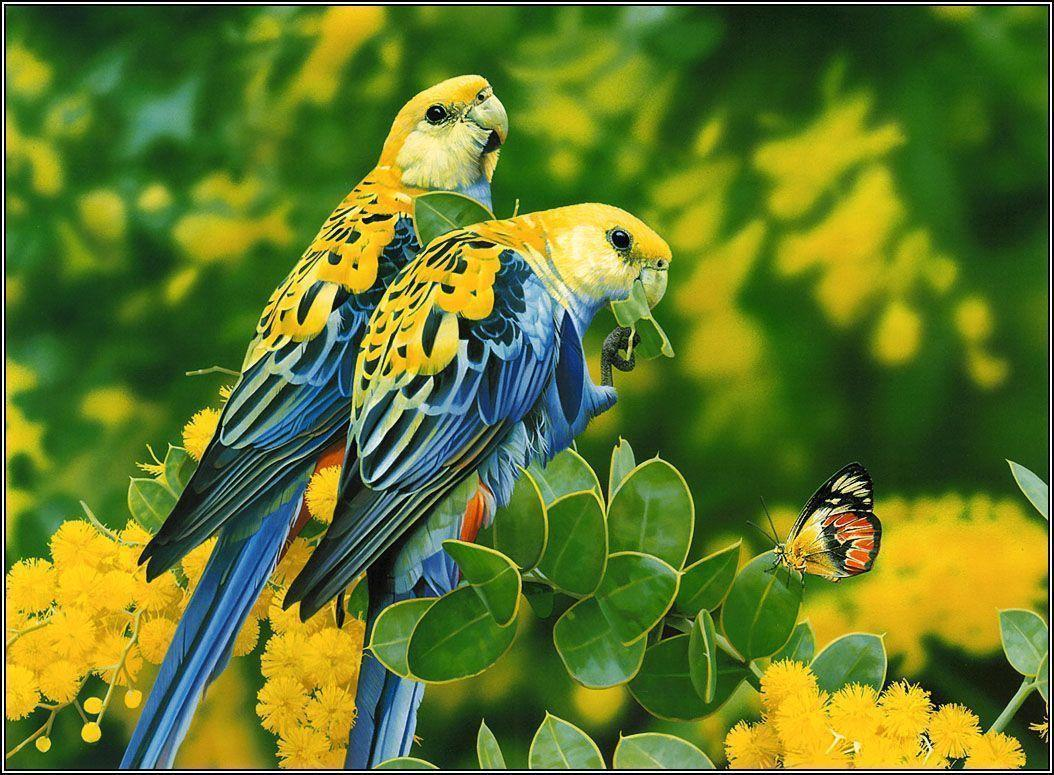 lovebirds wallpapers – 1054×775 High Definition Wallpapers