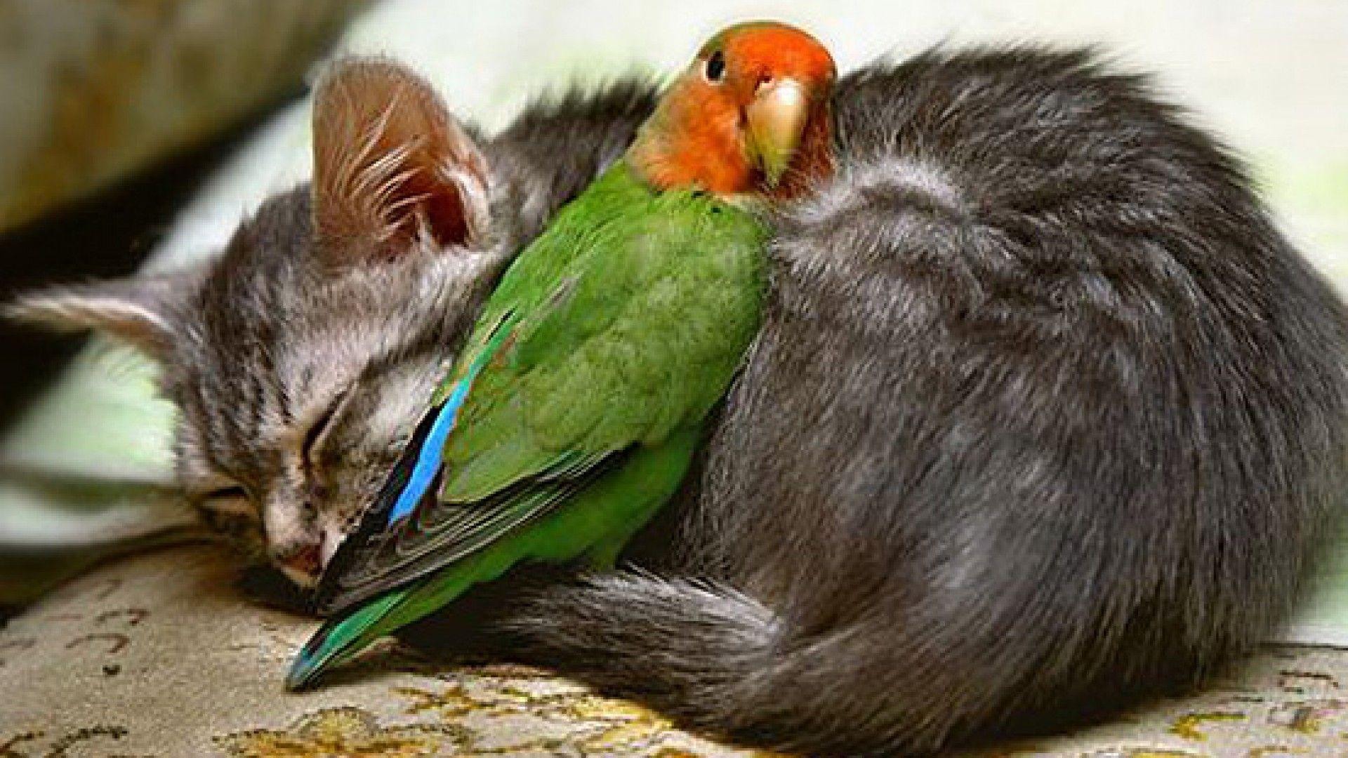 Wallpapers For > Hd Love Birds Wallpapers 1080p