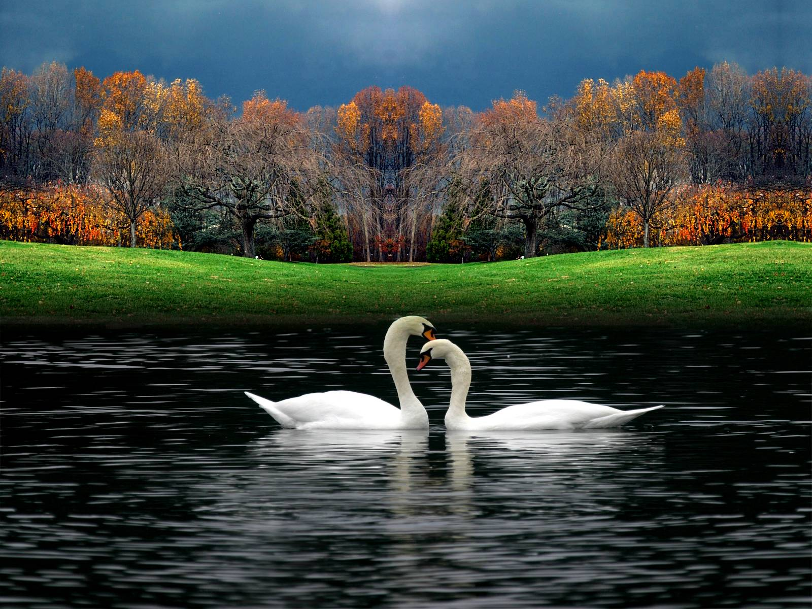 Animals For > Love Birds Wallpapers