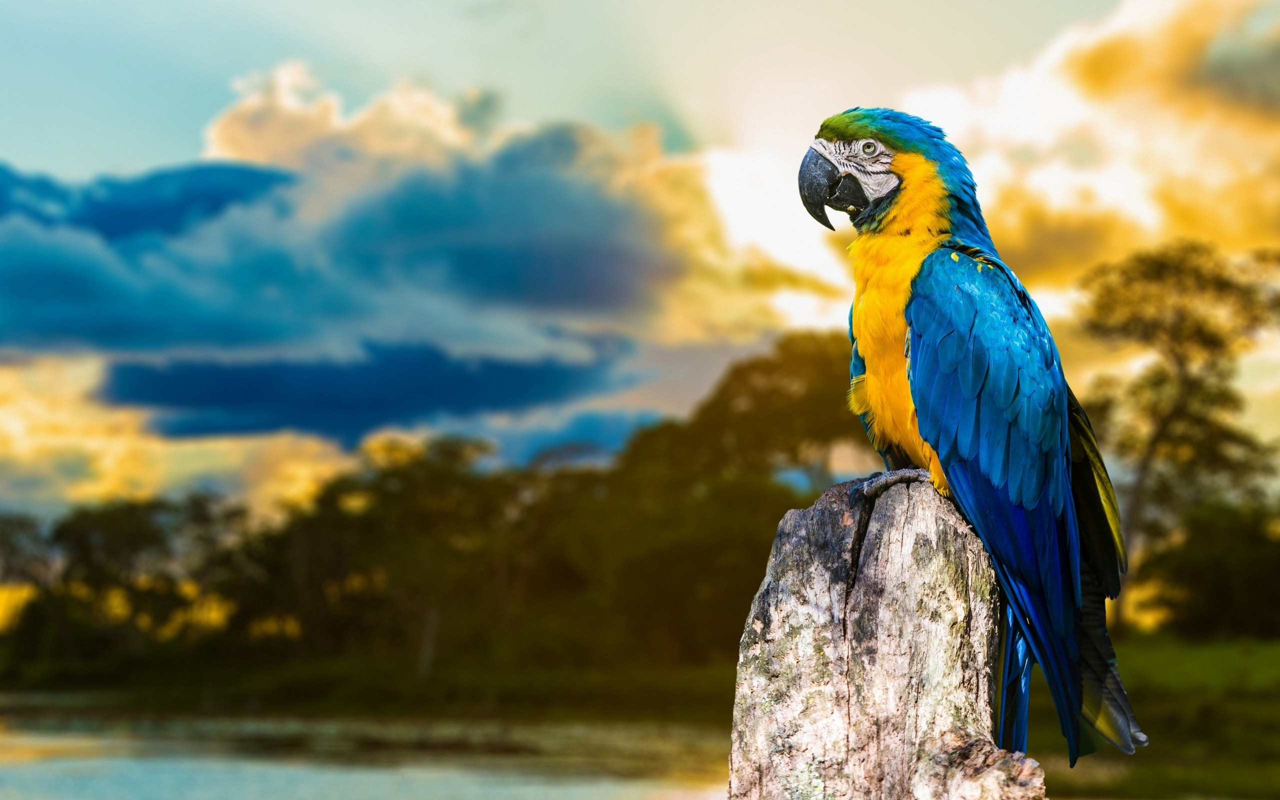 Macaw Parrot HD Wallpapers
