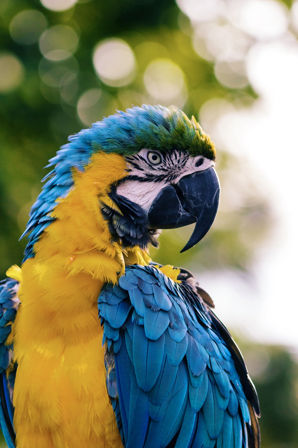 Macaw Pictures [HD]