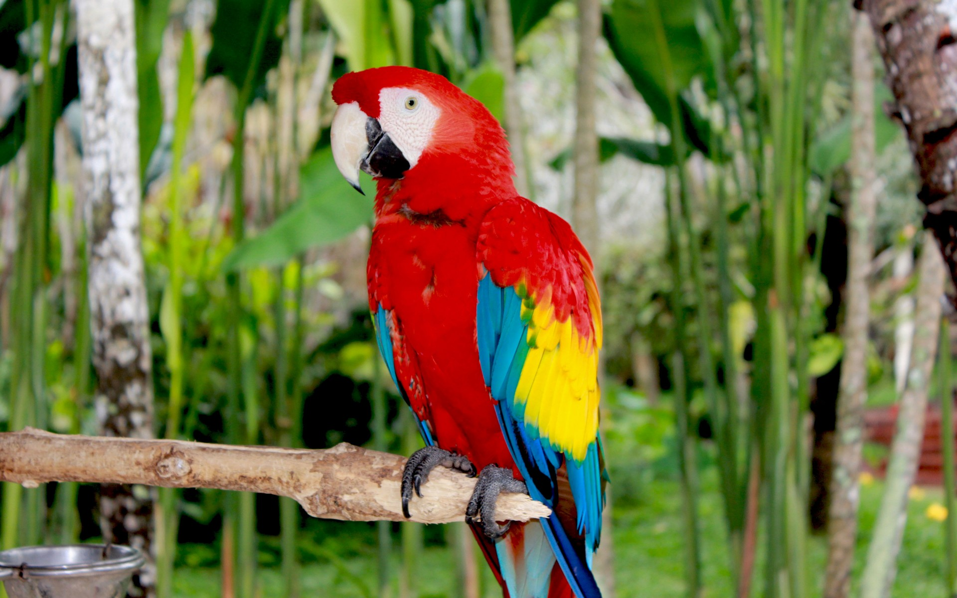 Macaw Wallpapers 13