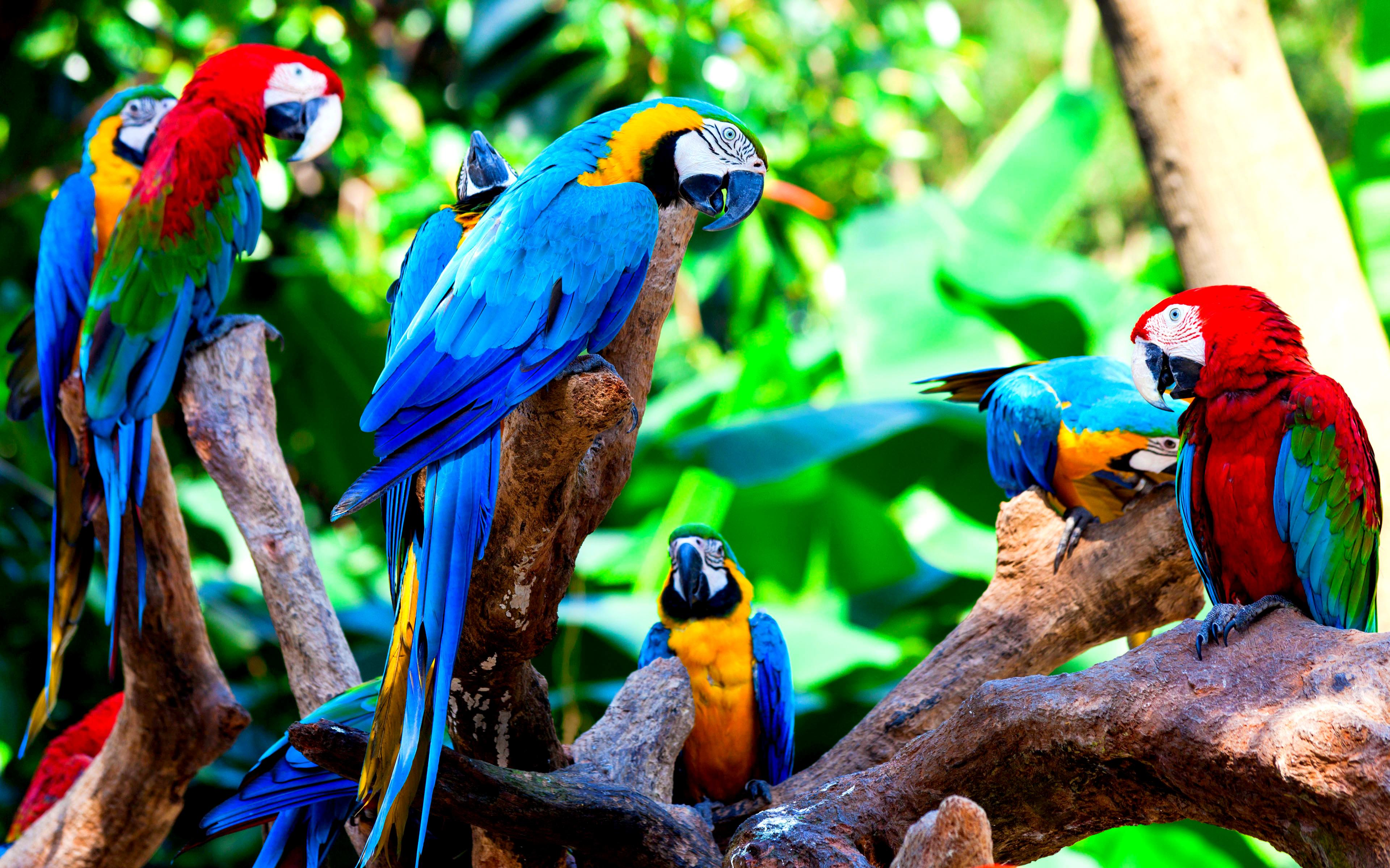 Macaw Wallpapers 10