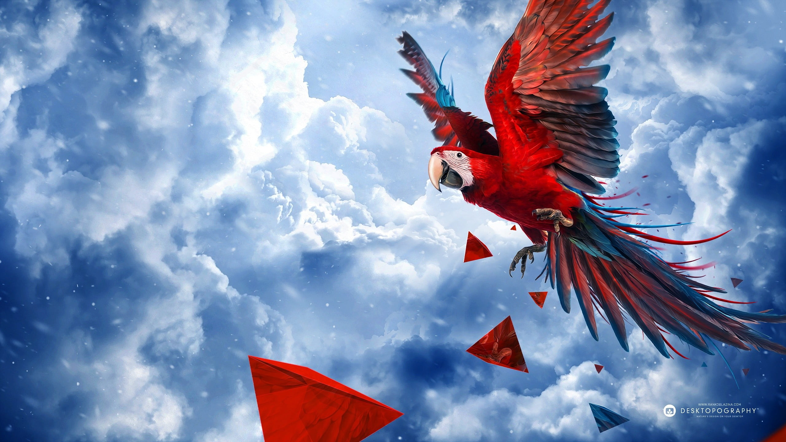 Scarlet Macaw Wallpapers and Backgrounds Image