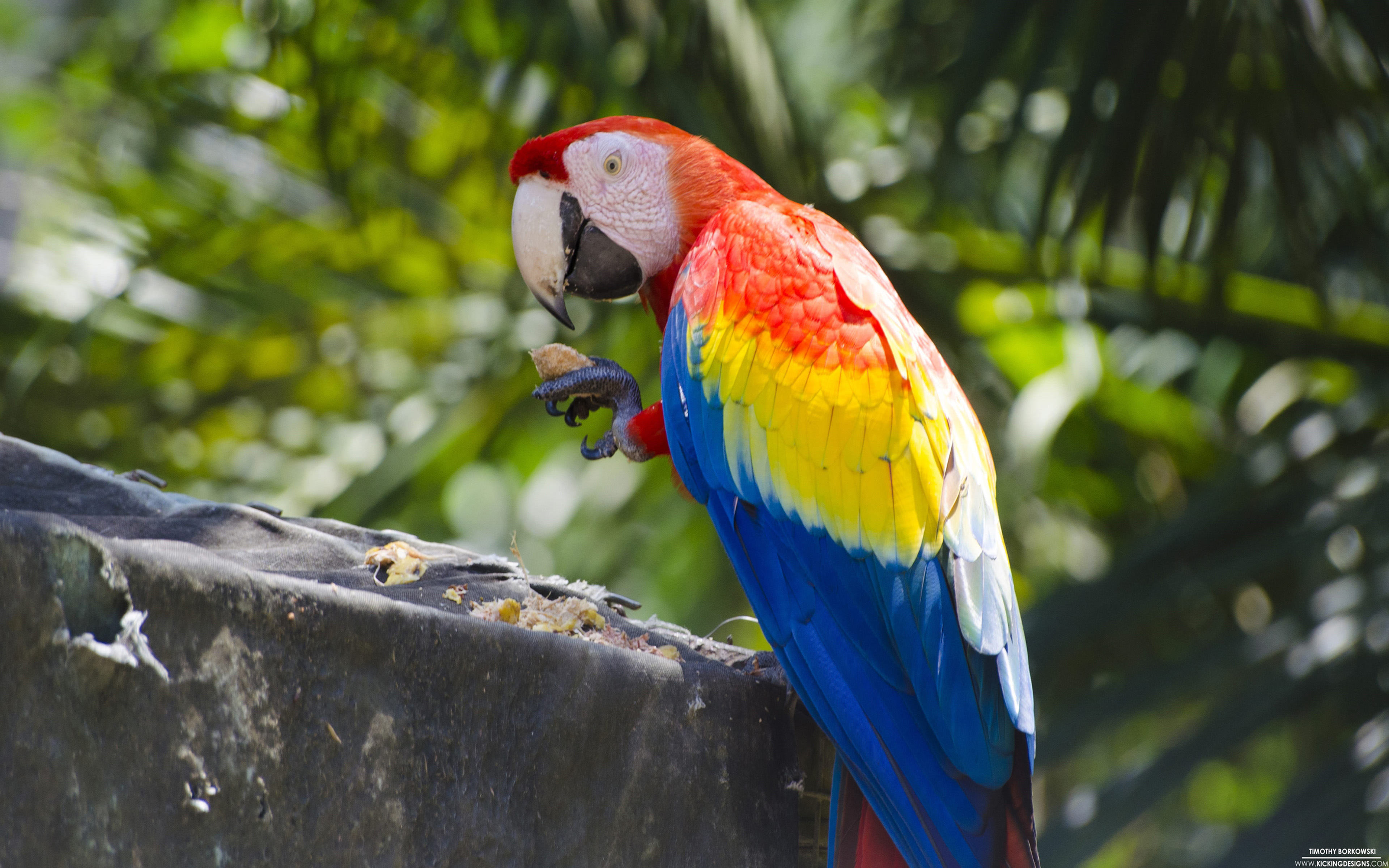 Scarlet Macaw Parrot Ultra Hd Wallpapers : Wallpapers13