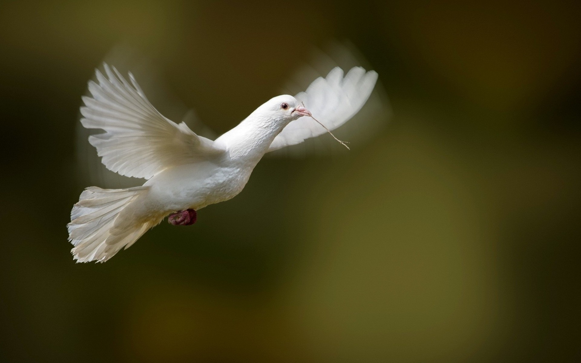 Beautiful Pigeons Wallpapers Group