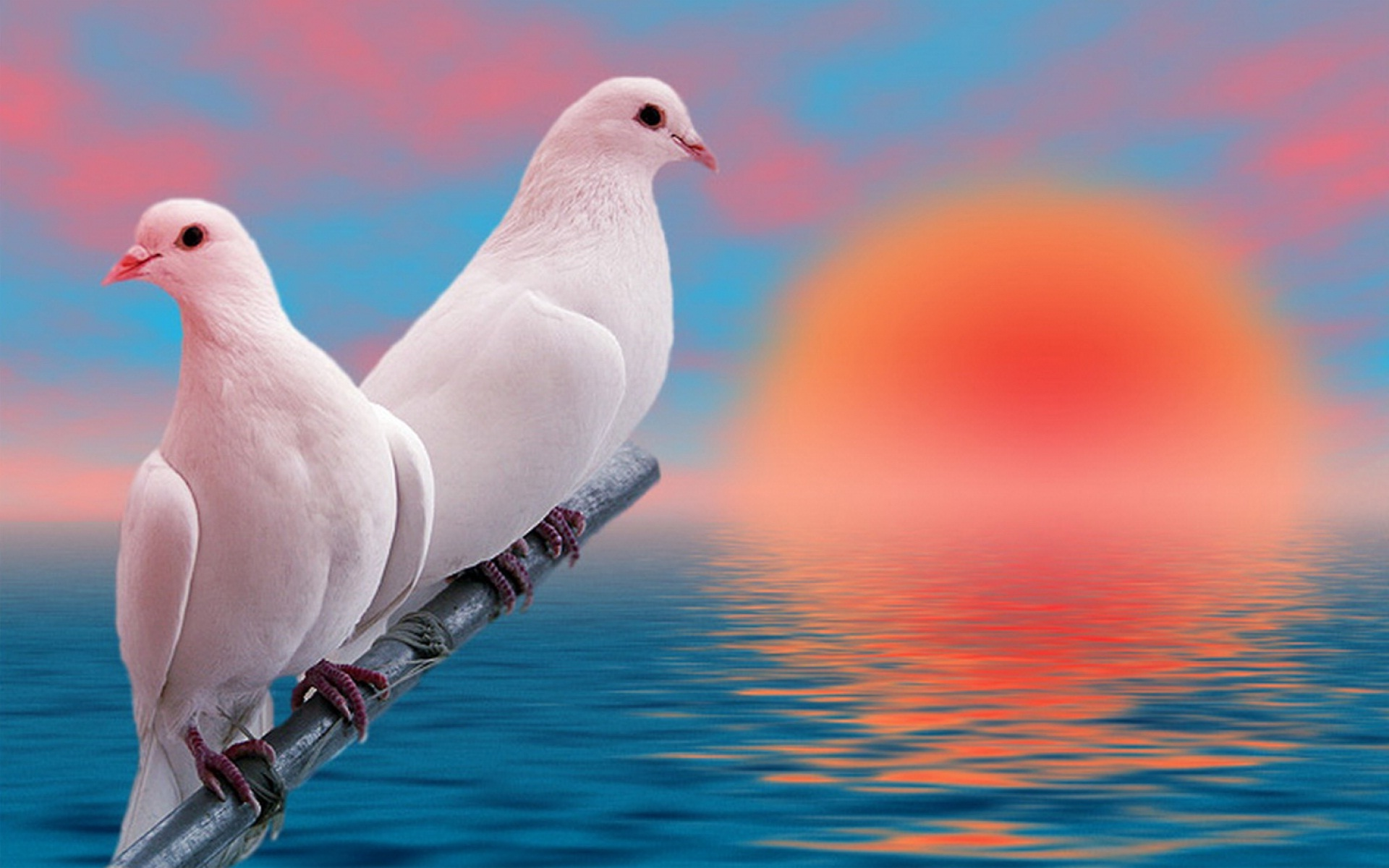 Pigeon Wallpapers Free Download