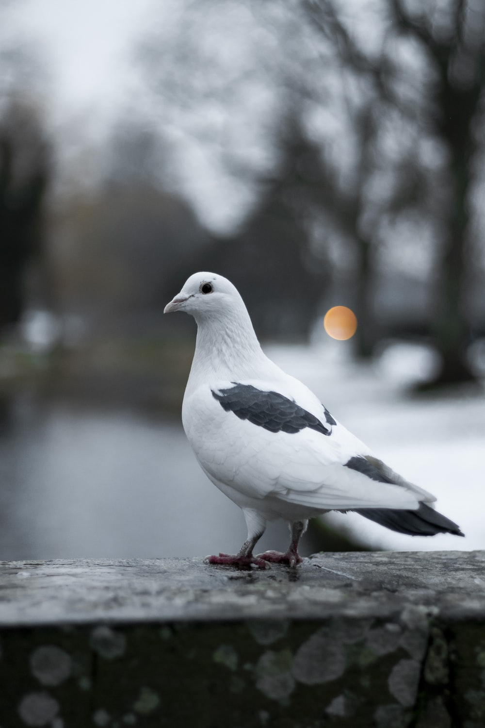 500+ Pigeon Pictures