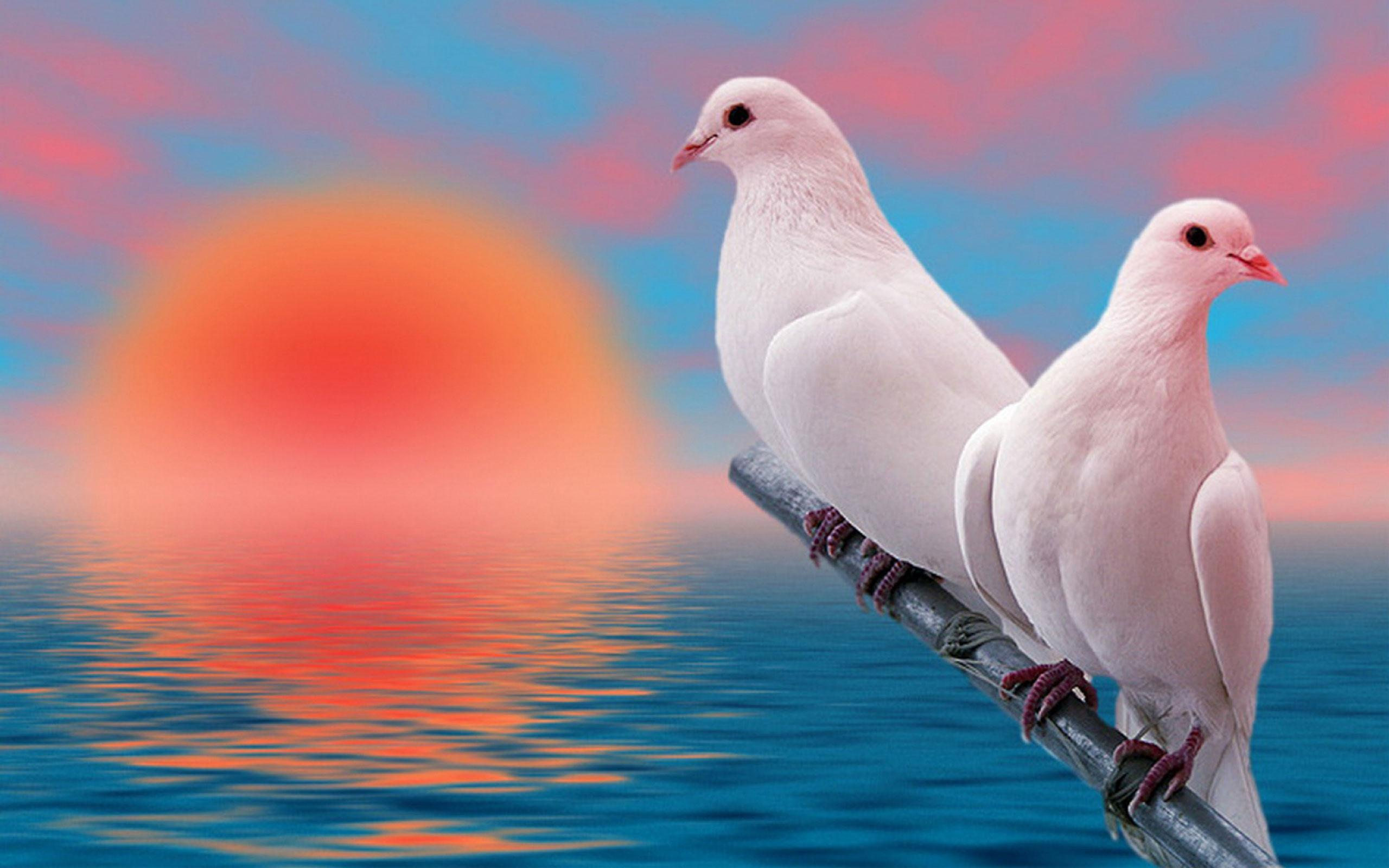 Dove Live Wallpapers for Android