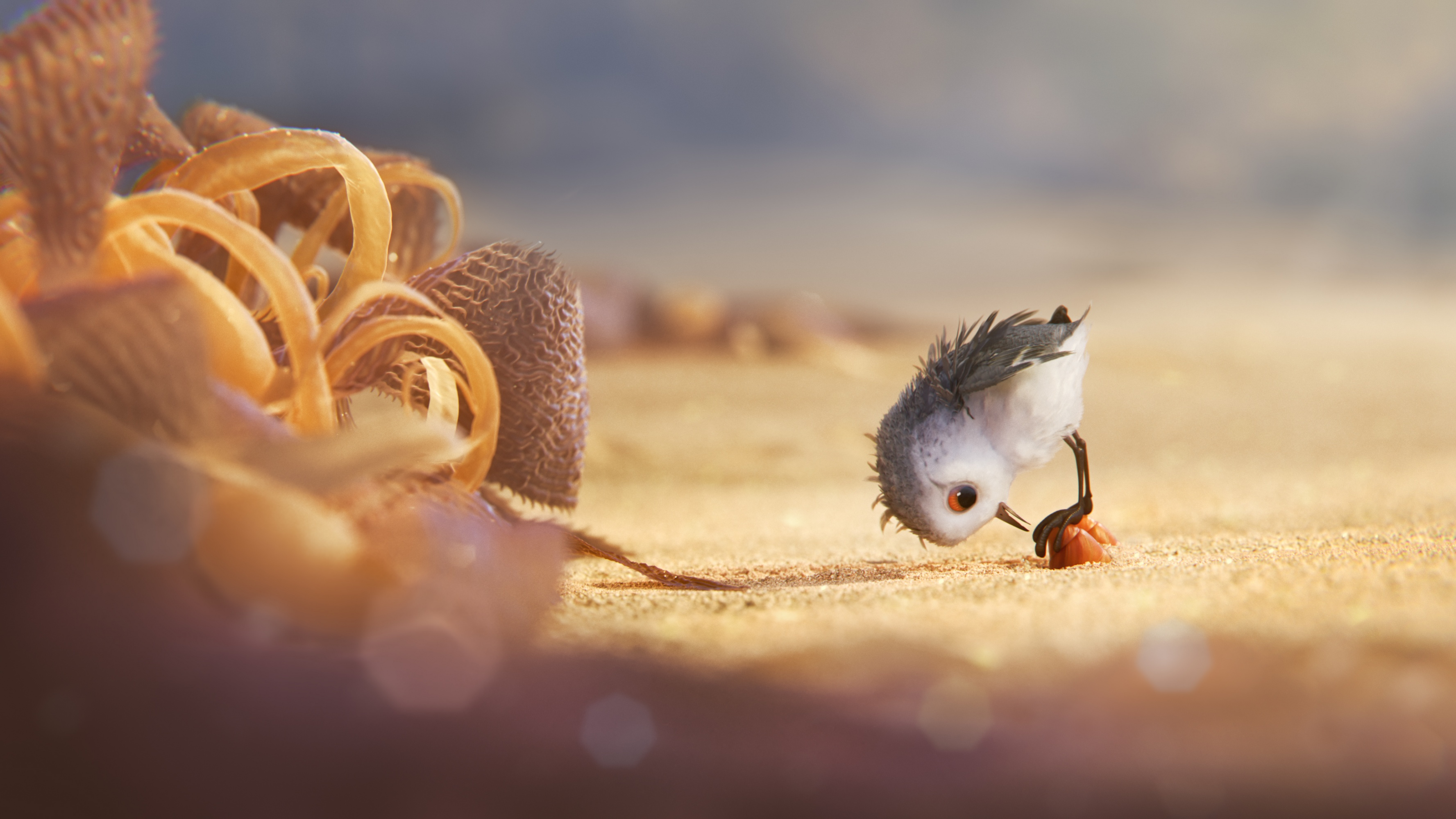Hungry Baby Sandpiper In Piper 2016 Wallpapers