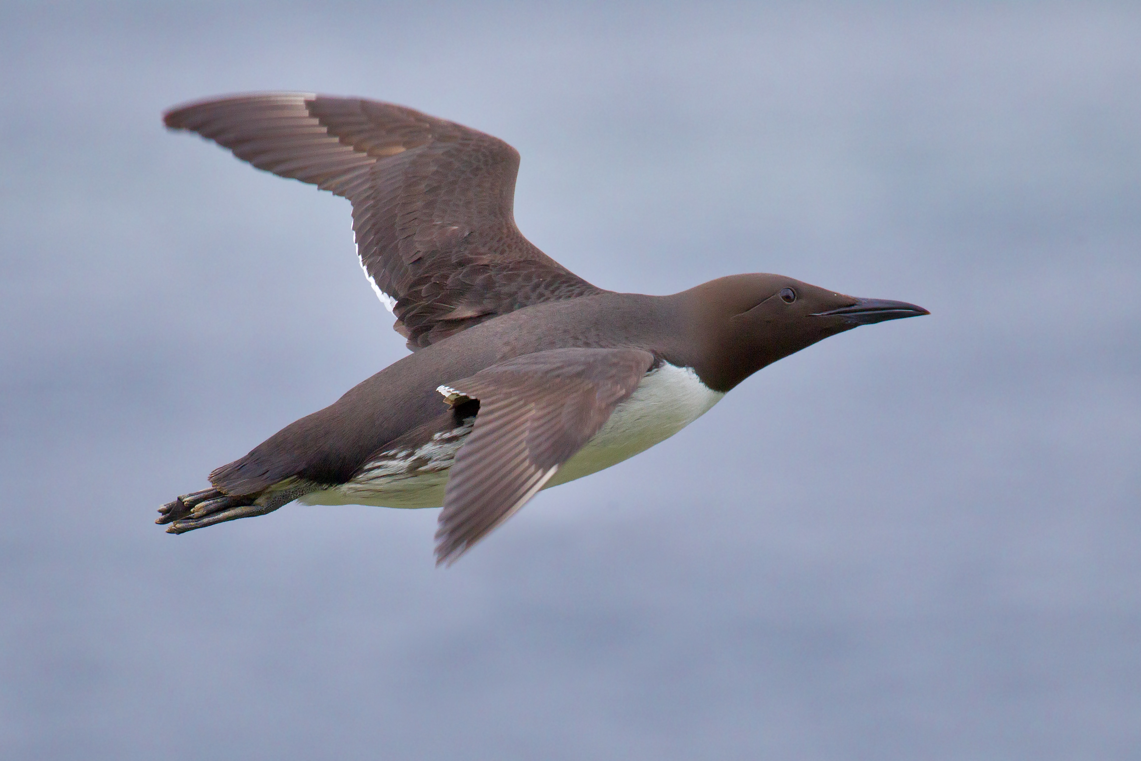 Seabirds: Learn All About 'Em – Part 4