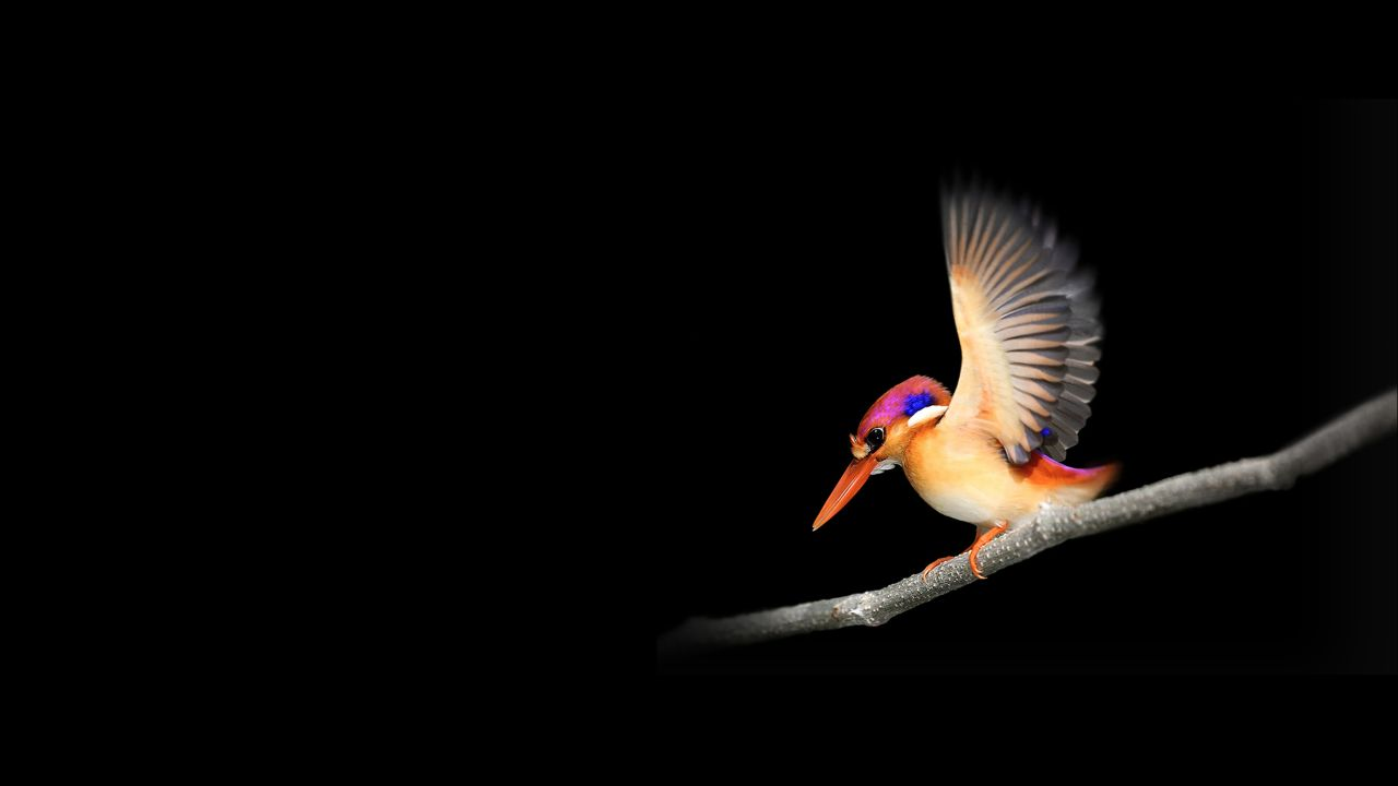 Wallpapers Woodpecker, Microsoft Surface Go, Stock, Dark backgrounds