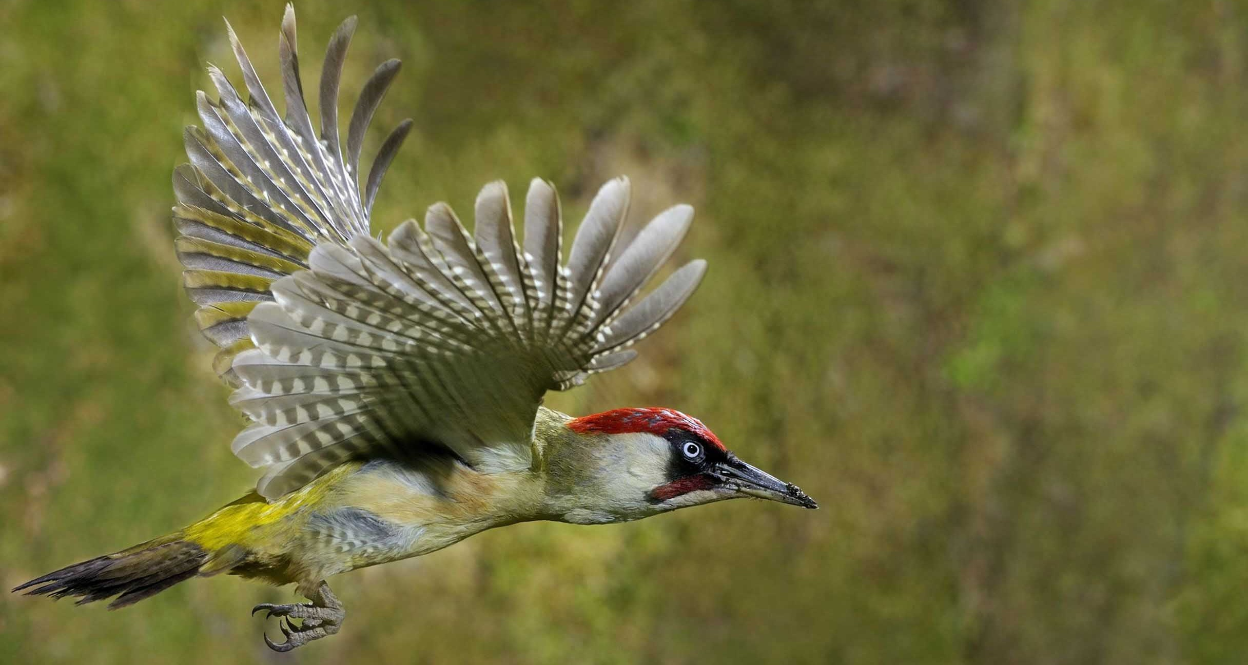 Quality Woodpecker Picture on Animal Picture Society