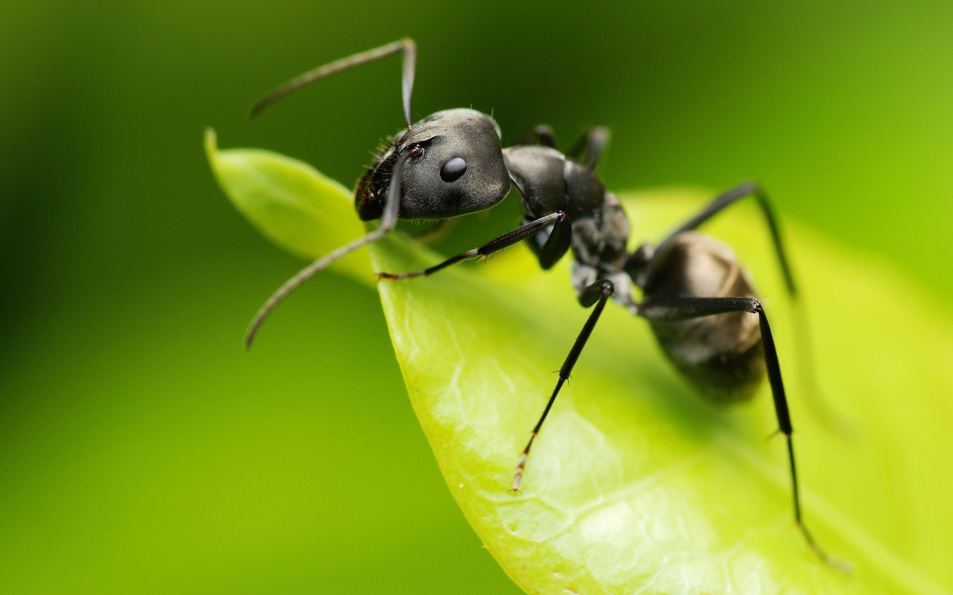 Ant Wallpaper Backgrounds