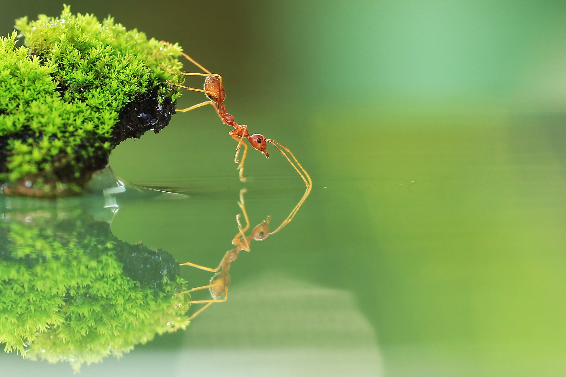 Ant HD Wallpapers