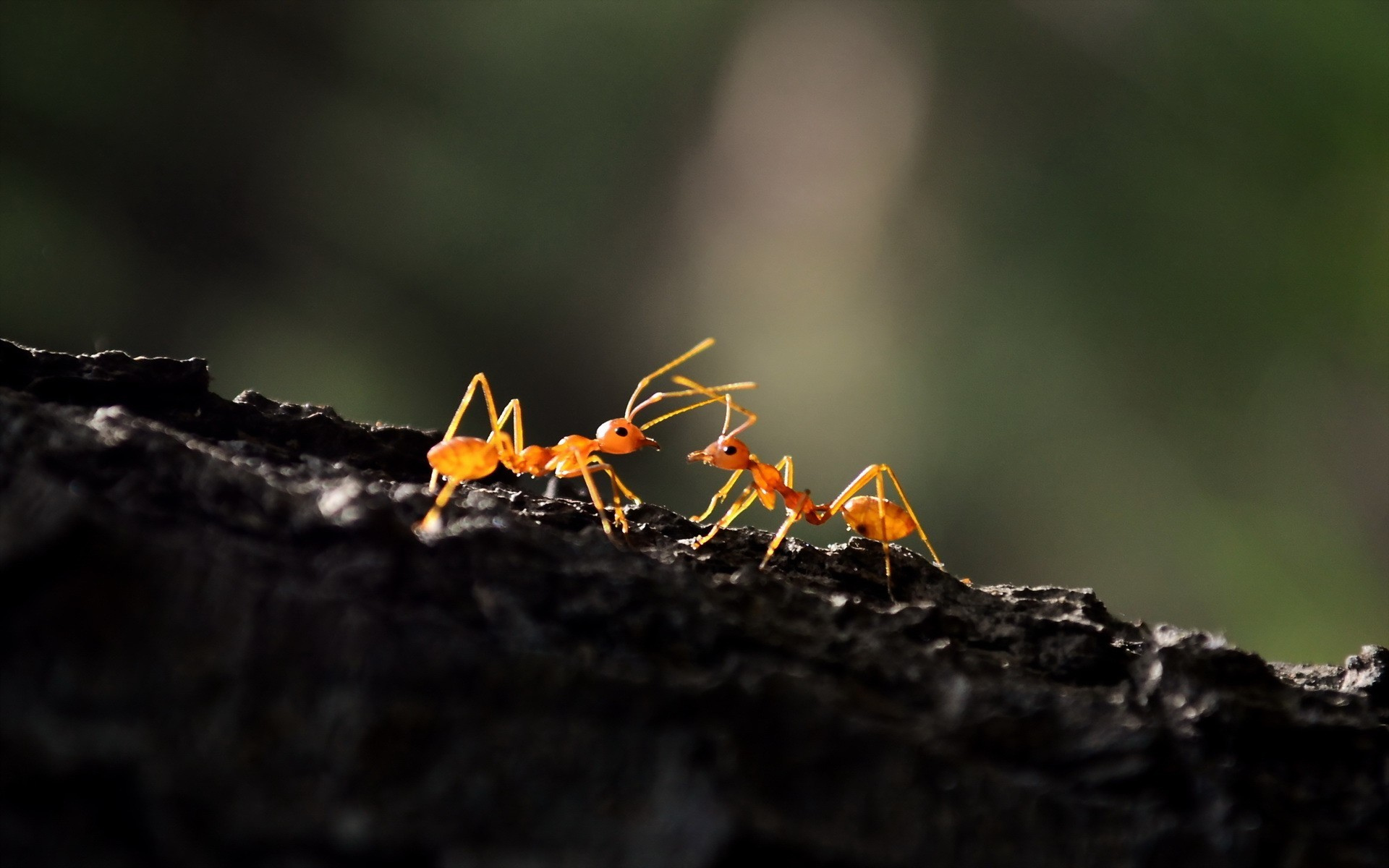 Ant Macro, HD Photography, 4k Wallpapers, Image, Backgrounds