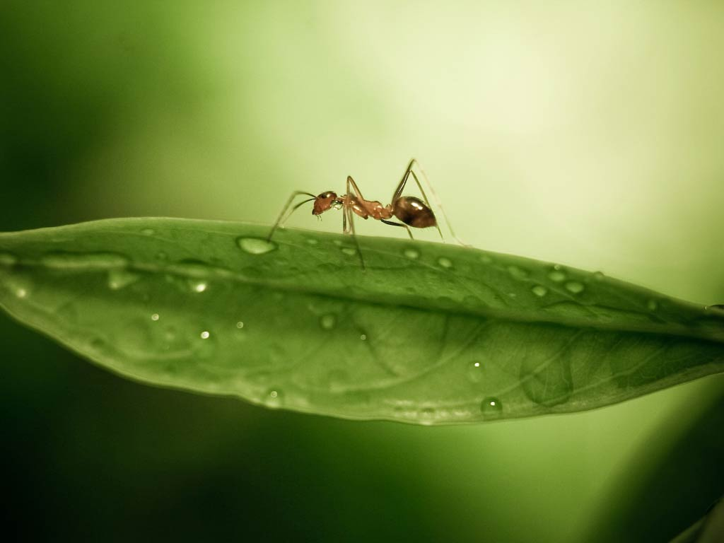 Ant Wallpapers 12