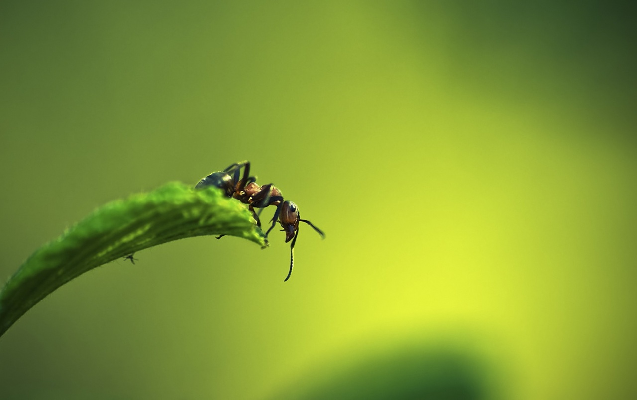 Ant Wallpapers 7