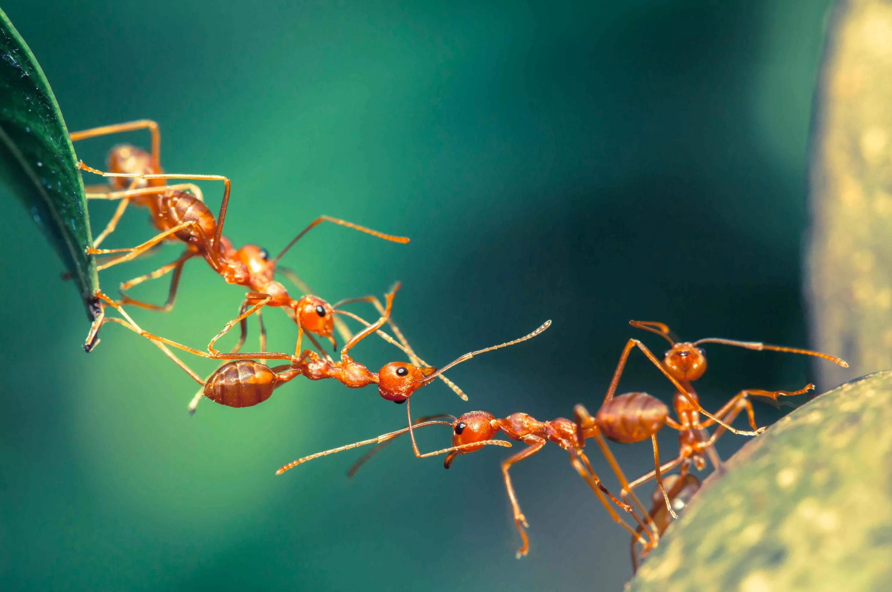 Ant HD Wallpapers free
