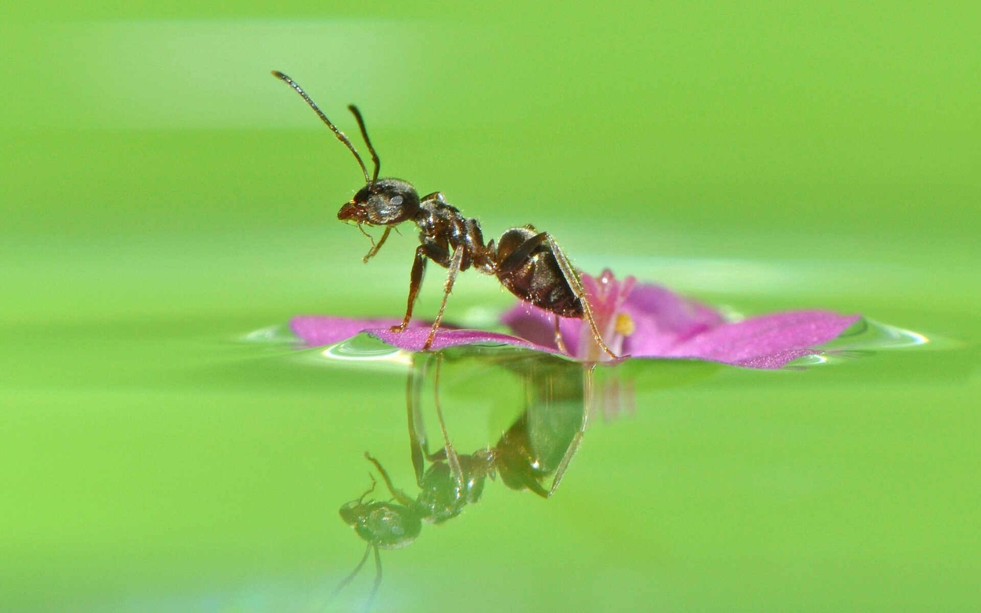 Ant Close Up Wallpapers 44258