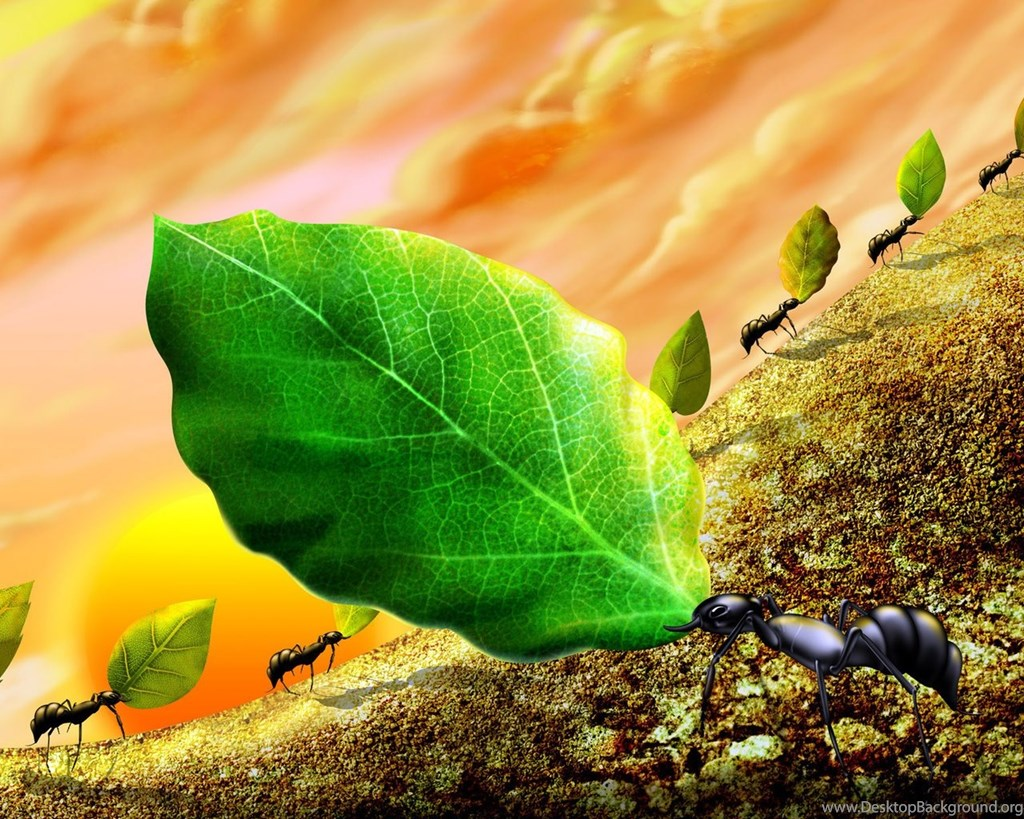 Ant Wallpapers Tag Desktop Backgrounds
