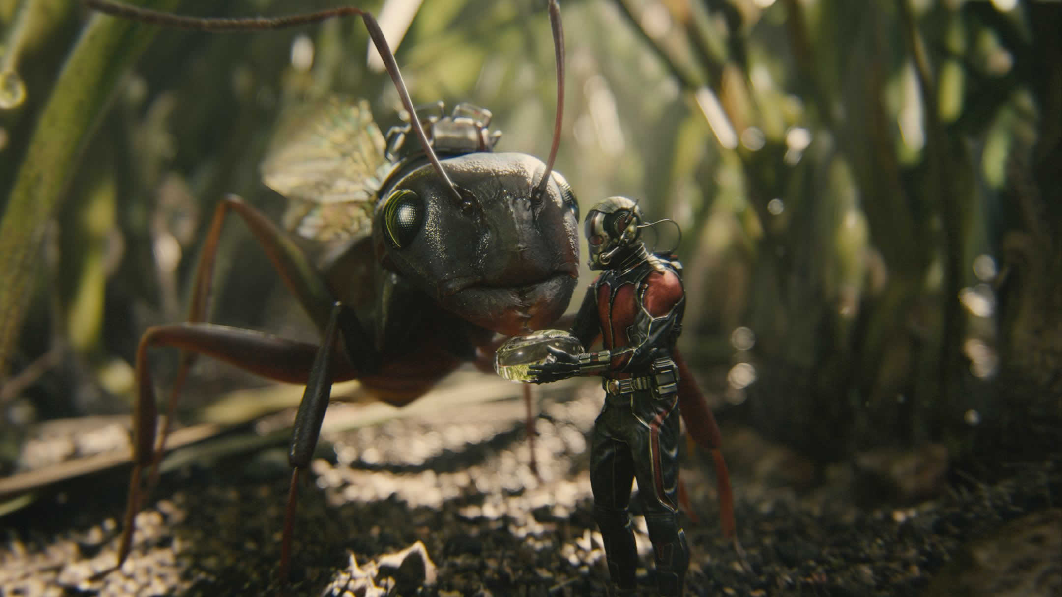VK.962: Ant Wallpapers
