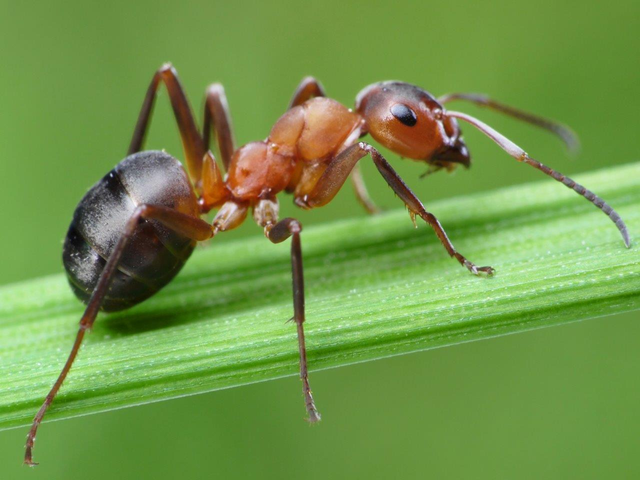 New Ant Wallpapers View Wallpapers