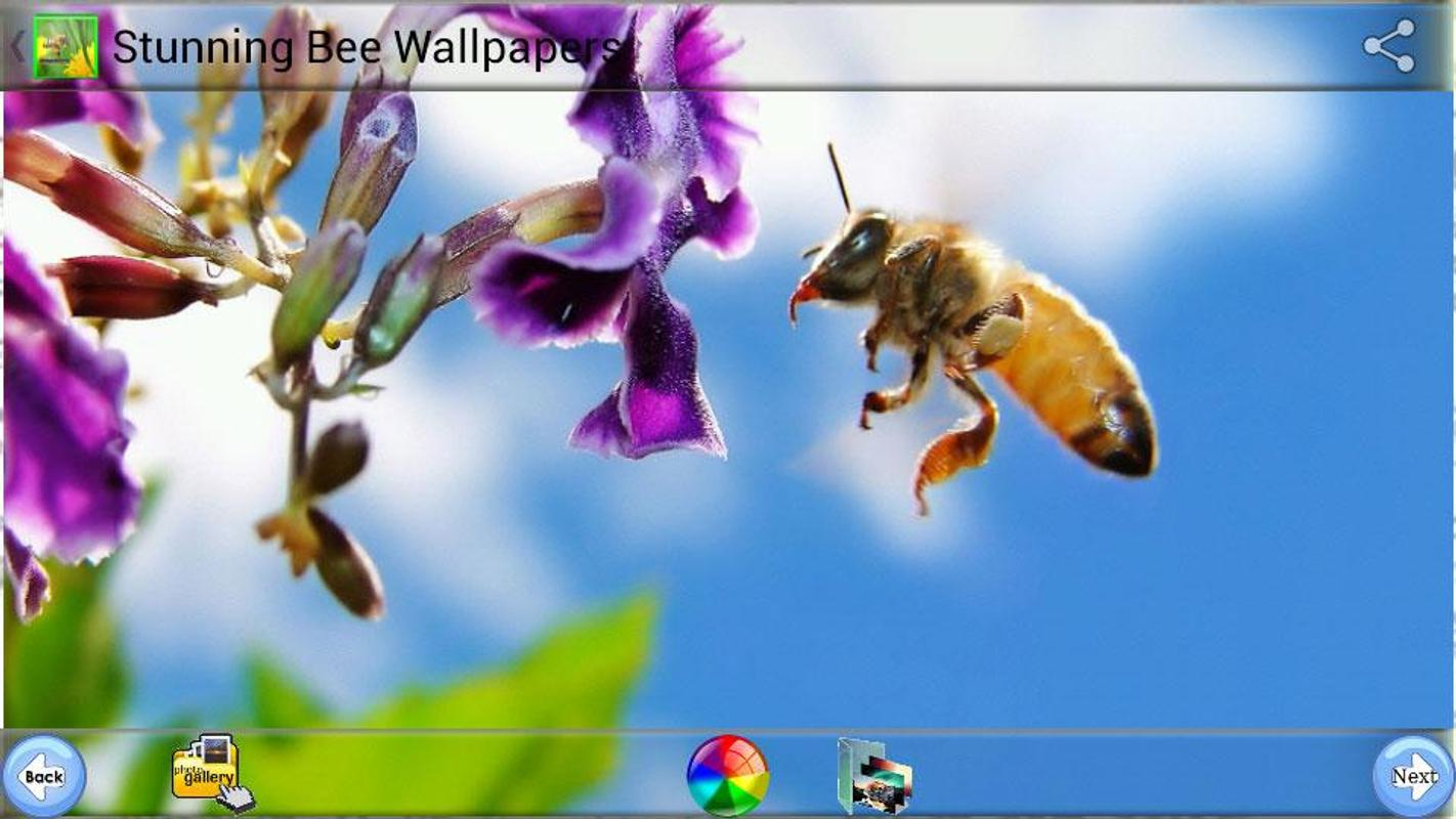 Bee Wallpapers for Android