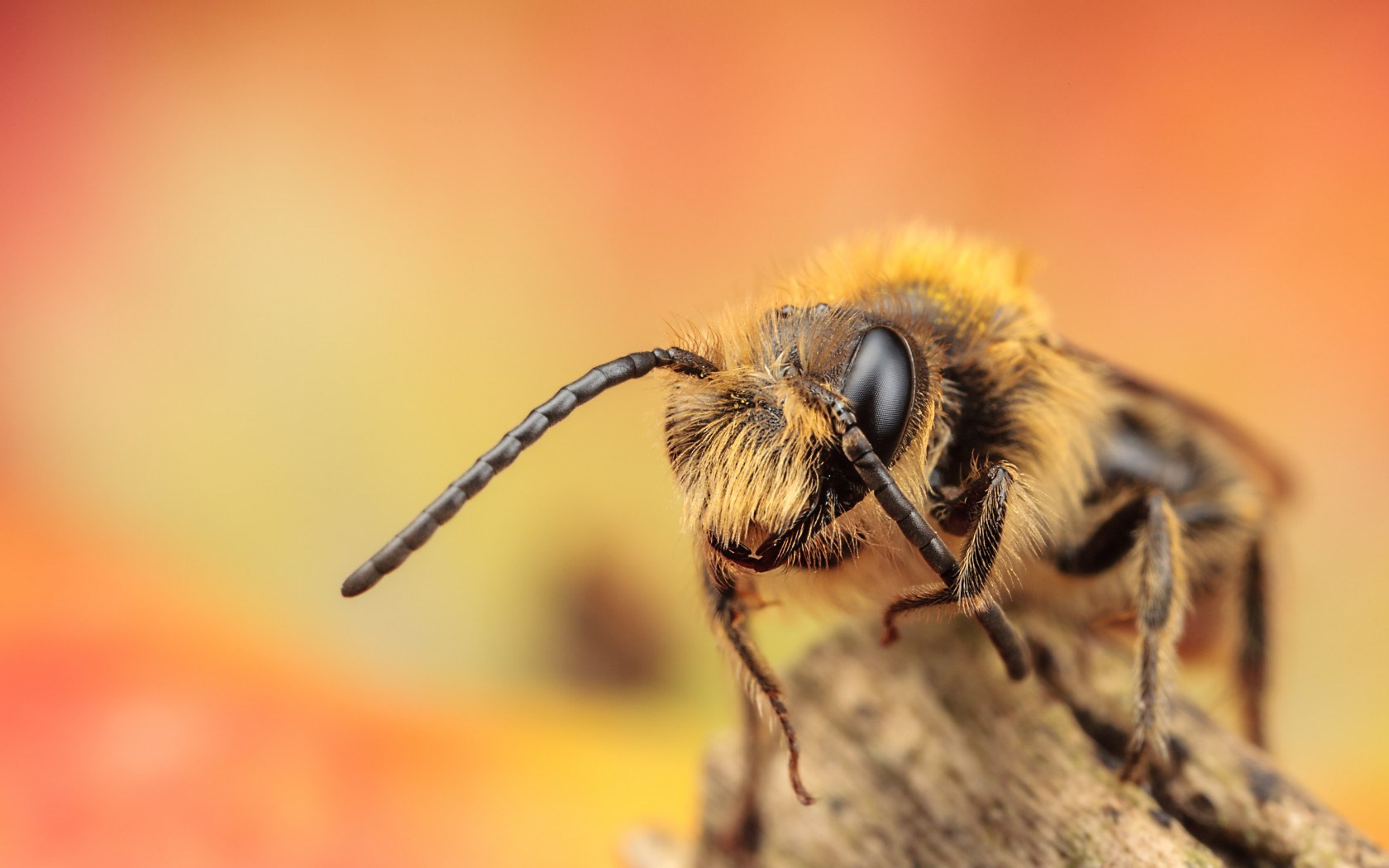 Bees Wallpapers for Walls Wonderful Bee Wallpapers Cartoon Hq Bee