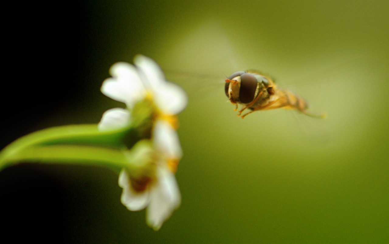Flower and Bee wallpapers