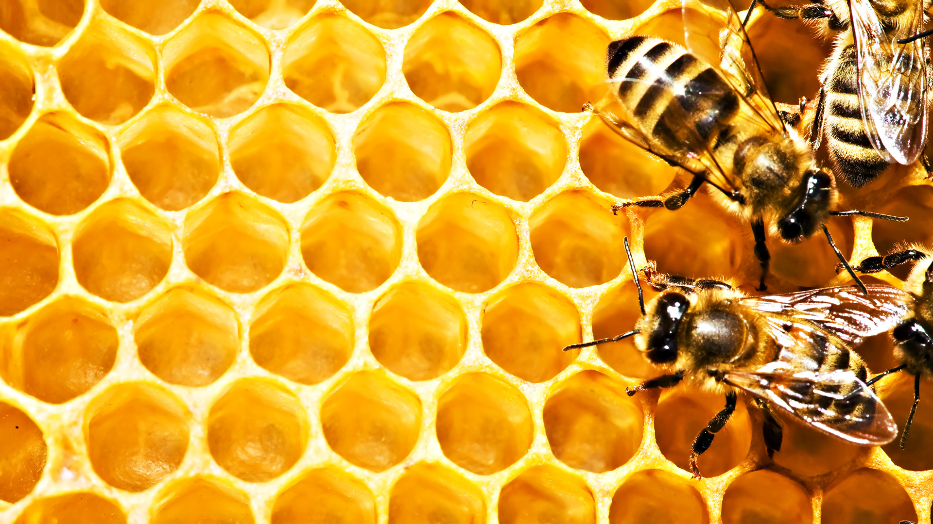 Group of Bee Wallpapers Hd