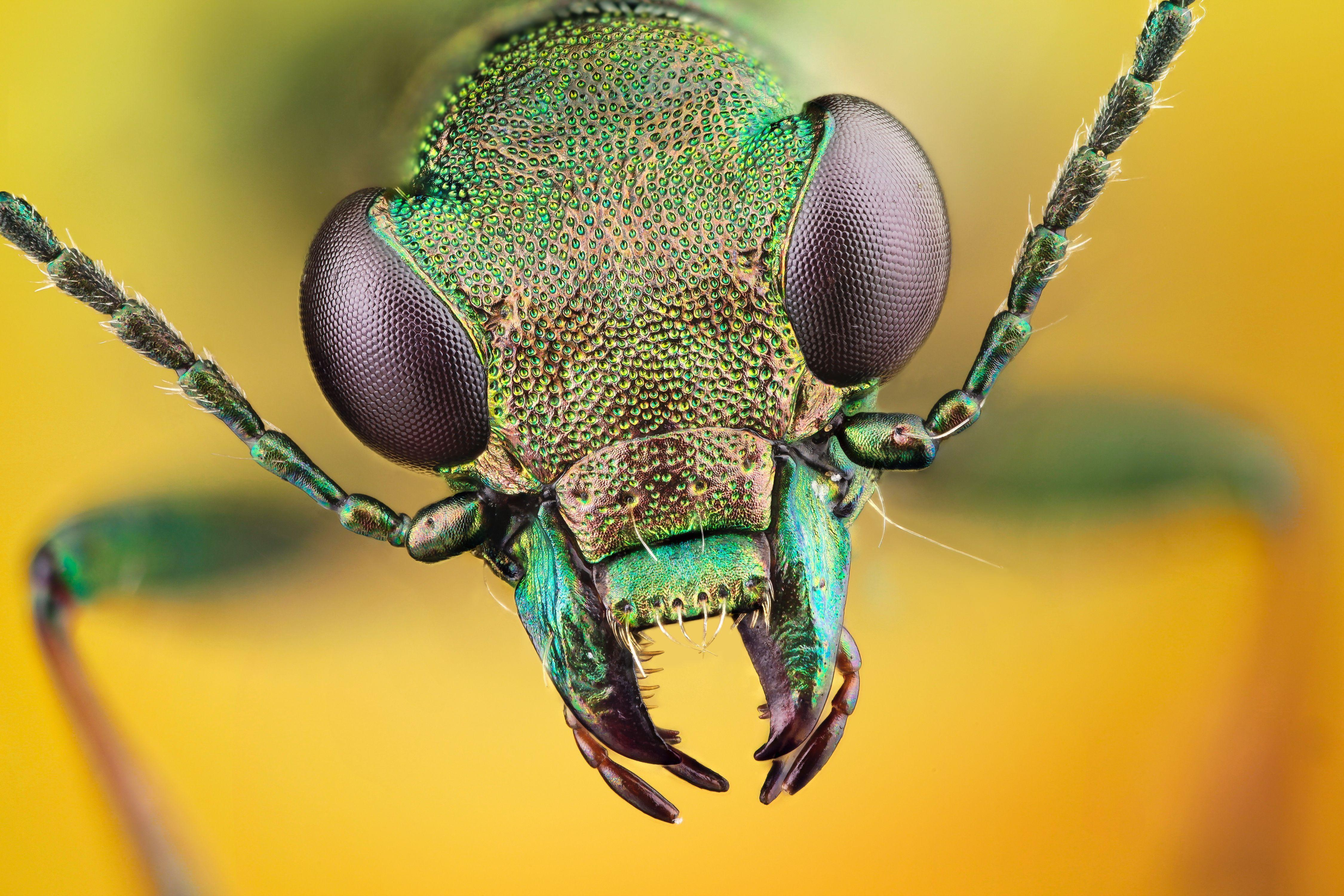 479 Insect HD Wallpapers