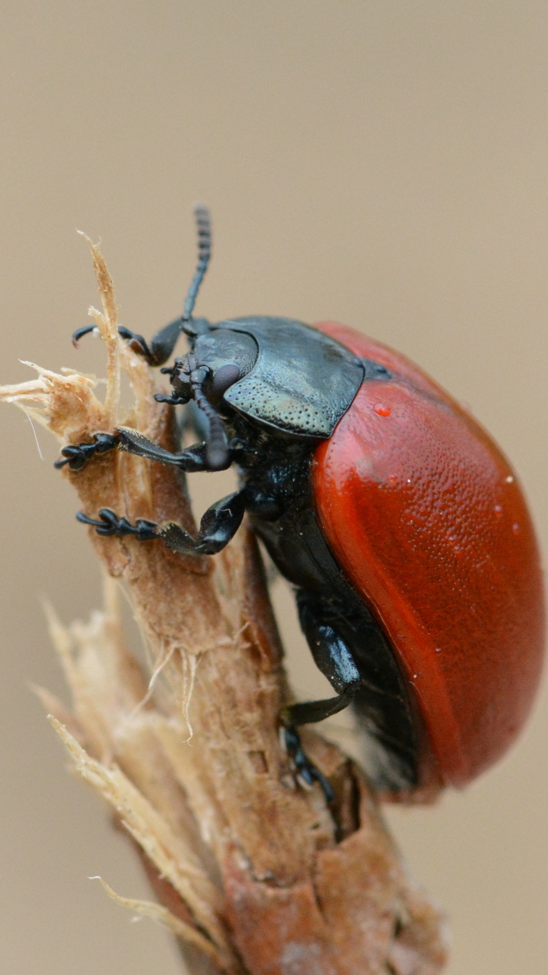 Download wallpapers 1080x1920 beetle, insect, armor, branch