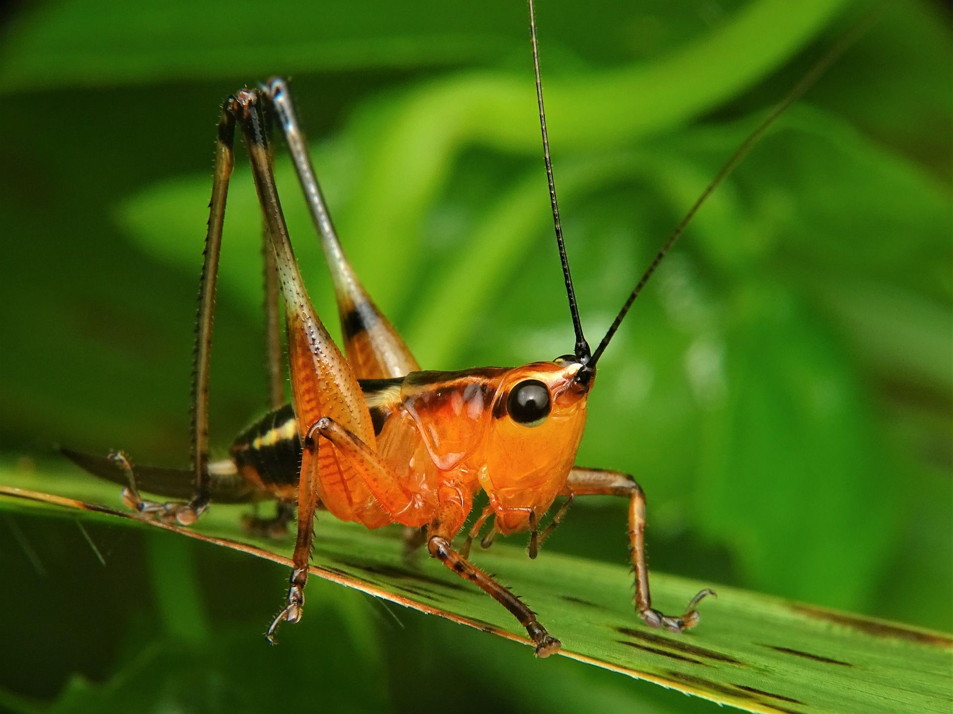 12 Arthropod Pictures Showcase Spiders, Crabs, and More