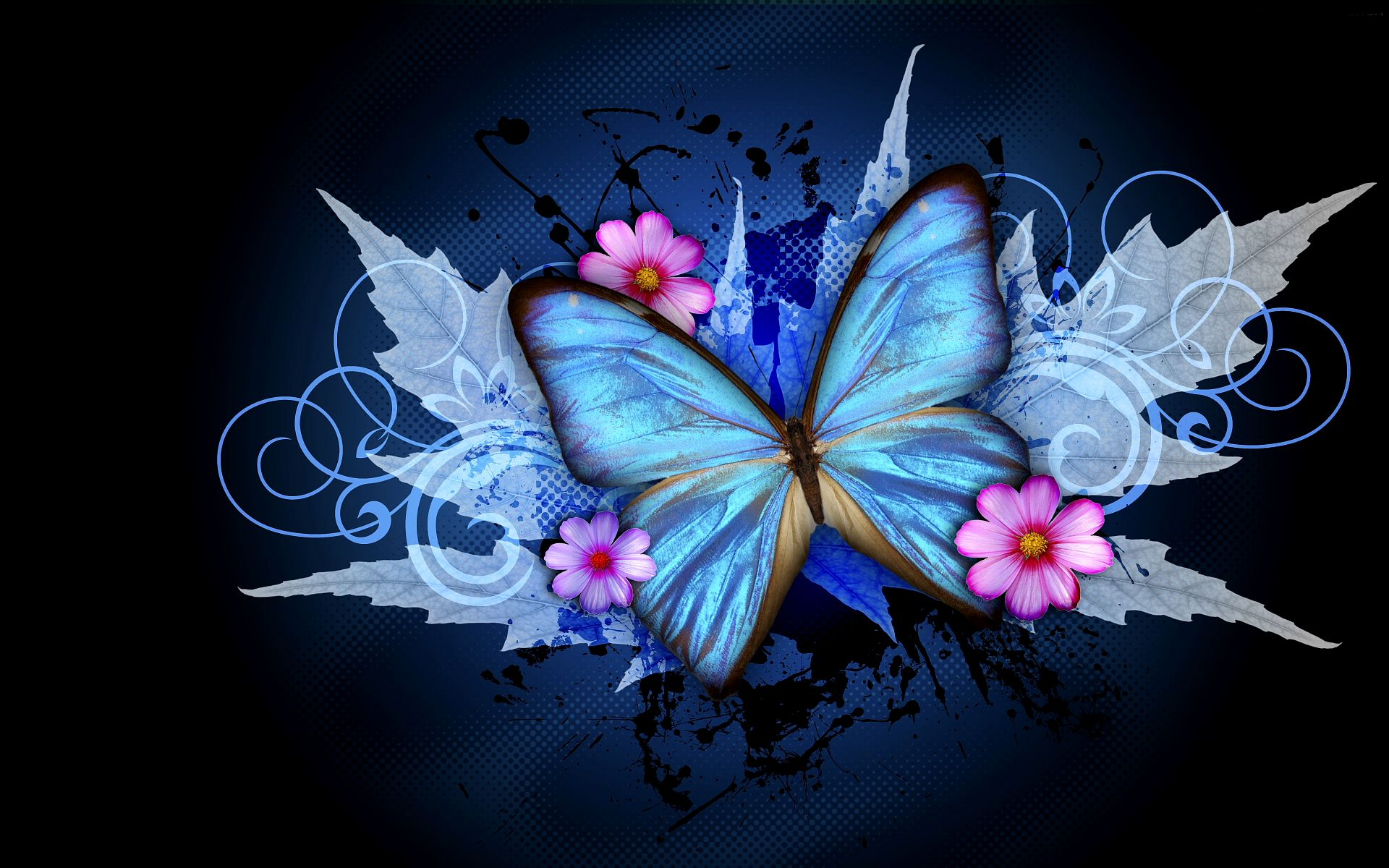 blue and black butterflies wallpapers