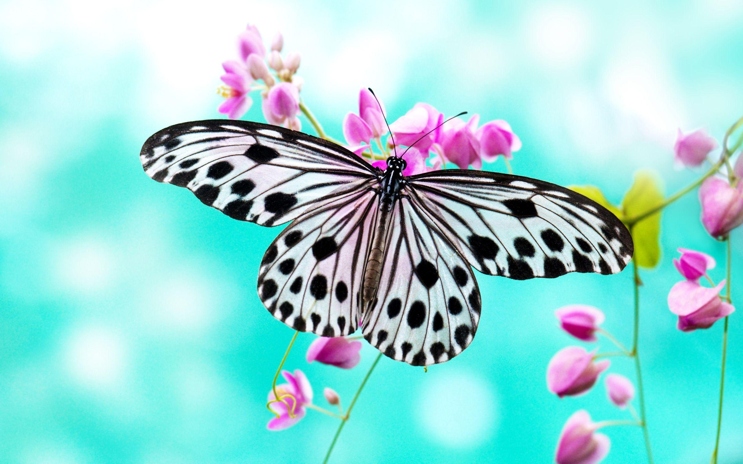 874 Butterfly Wallpapers