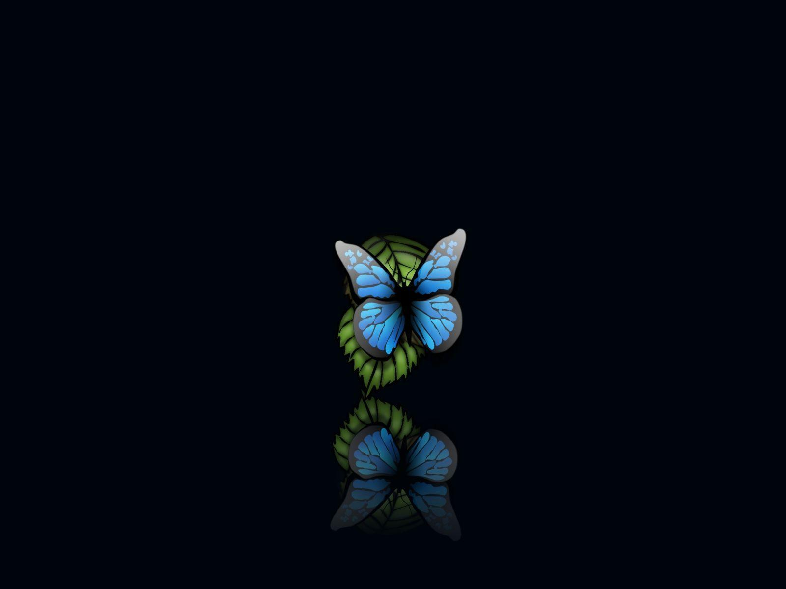 Butterfly wallpapers hd with beauty,butterfly wallpapers image with