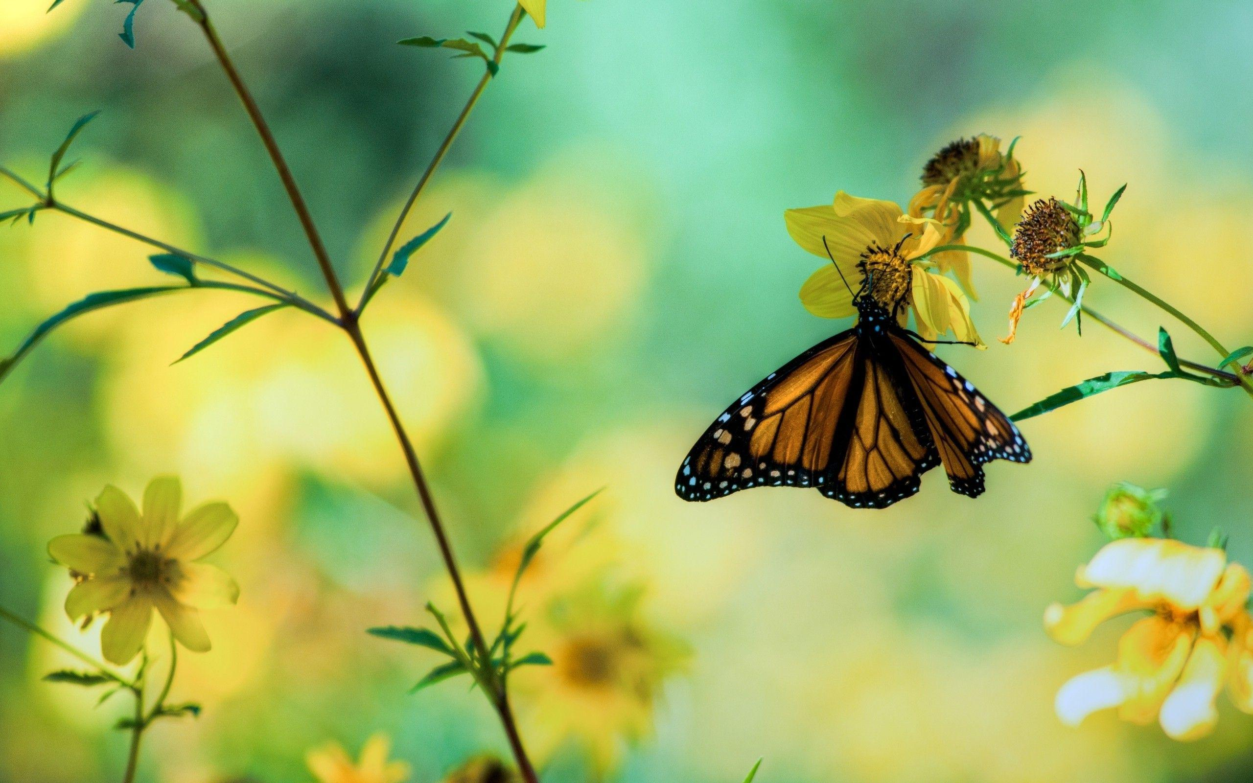Butterfly Wallpapers 53